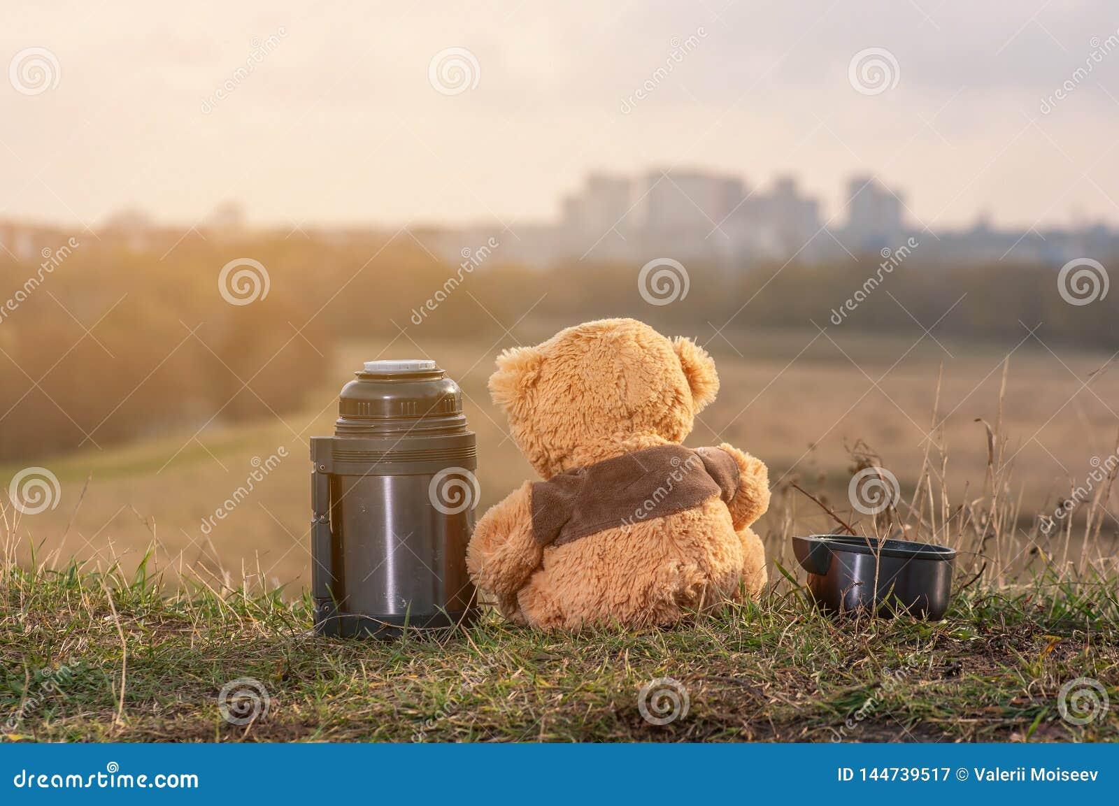 O par de ursos de peluche senta-se para trás nas folhas de outono caídas sobre um monte e em olhar a cidade na luz solar