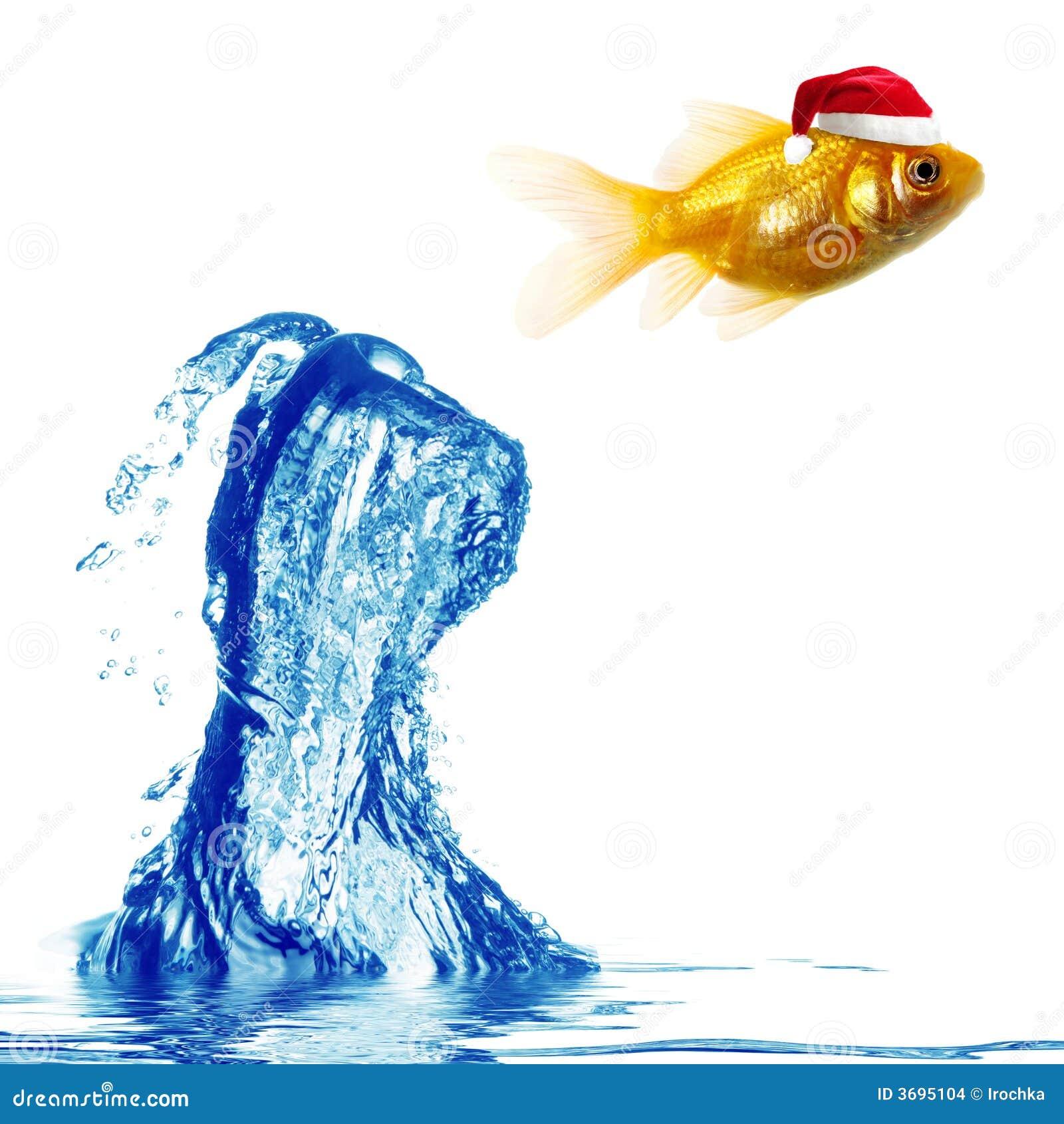 O peixe do ouro salta sobre a água