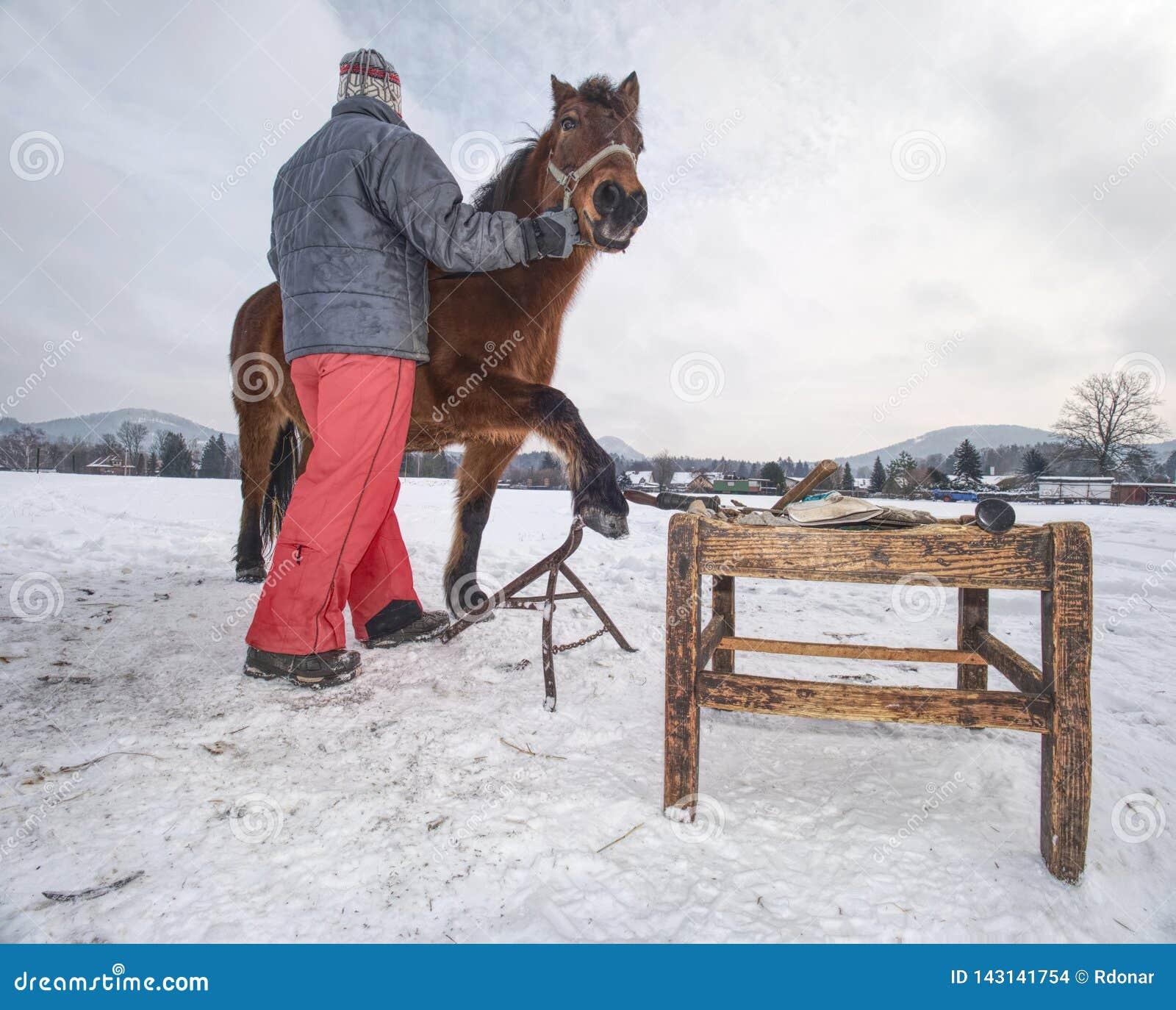 O pessoal da exploração agrícola prepara o cavalo para os cascos que cancelam pelo backsmith