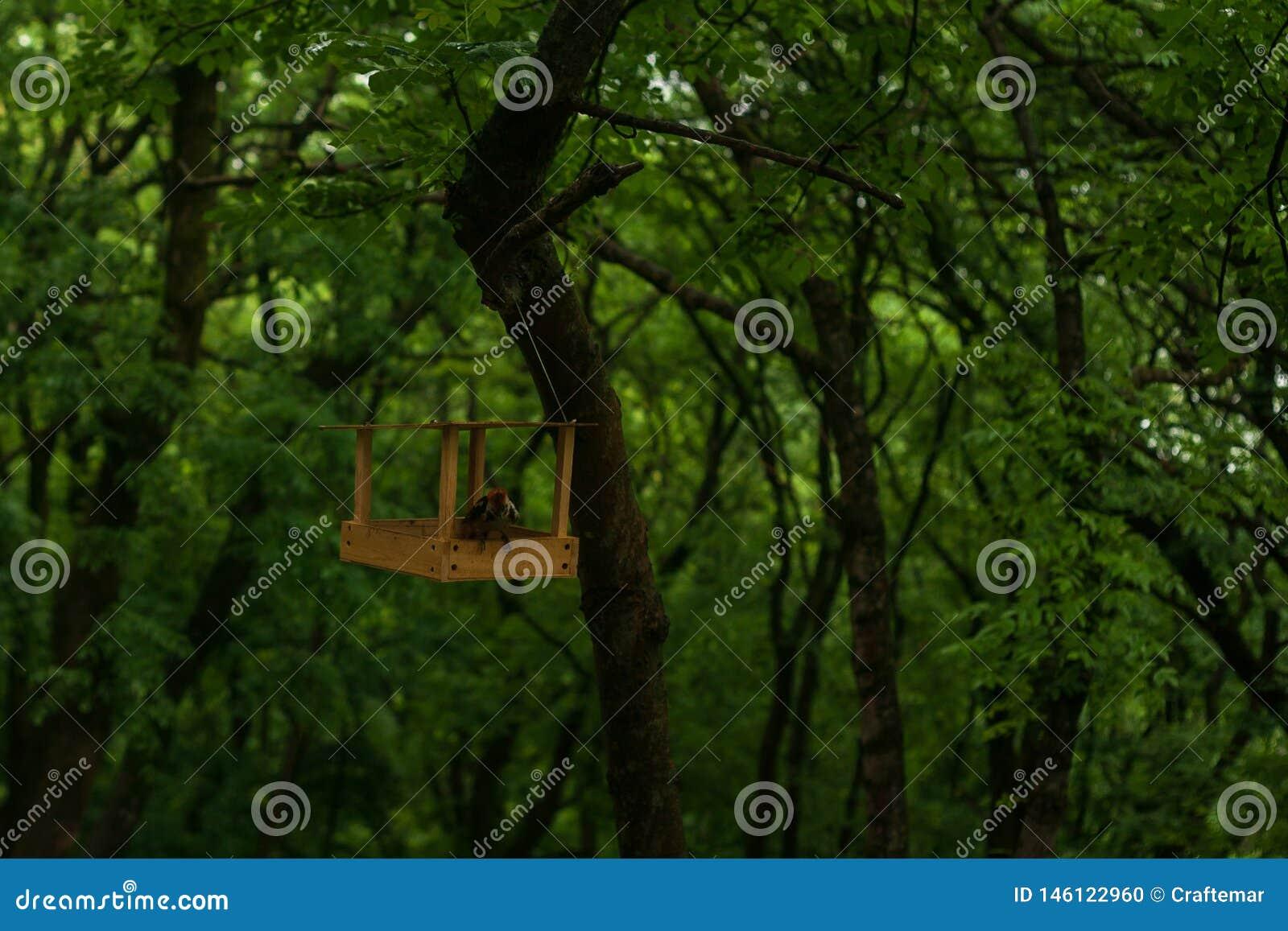 O pica-pau Vermelho-dirigido produz o alimento no ficker da floresta escava sem-fins no parque