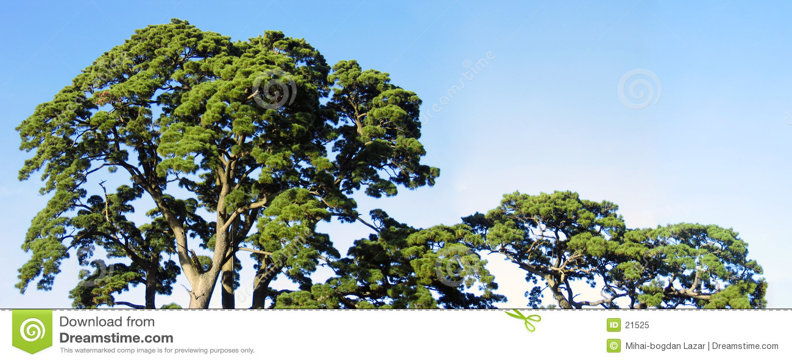 O pierwszej drzewa