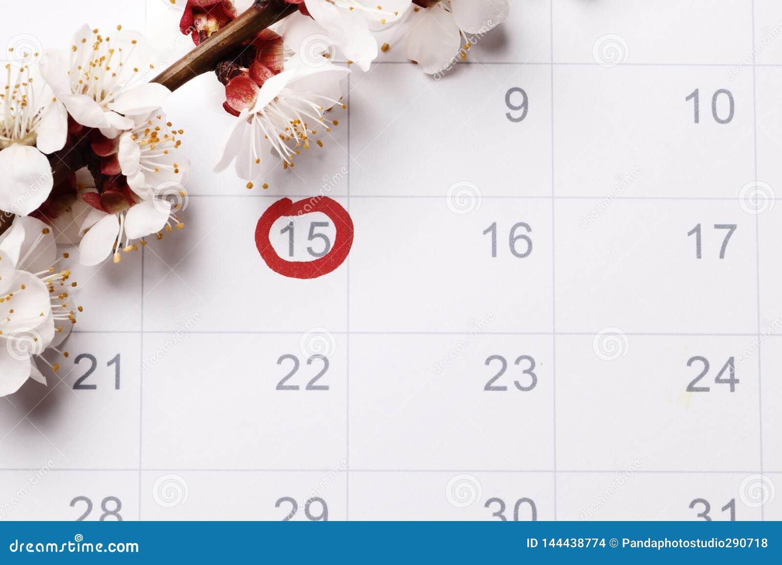 O planeamento do calendário da gravidez que tenta ter o bebê