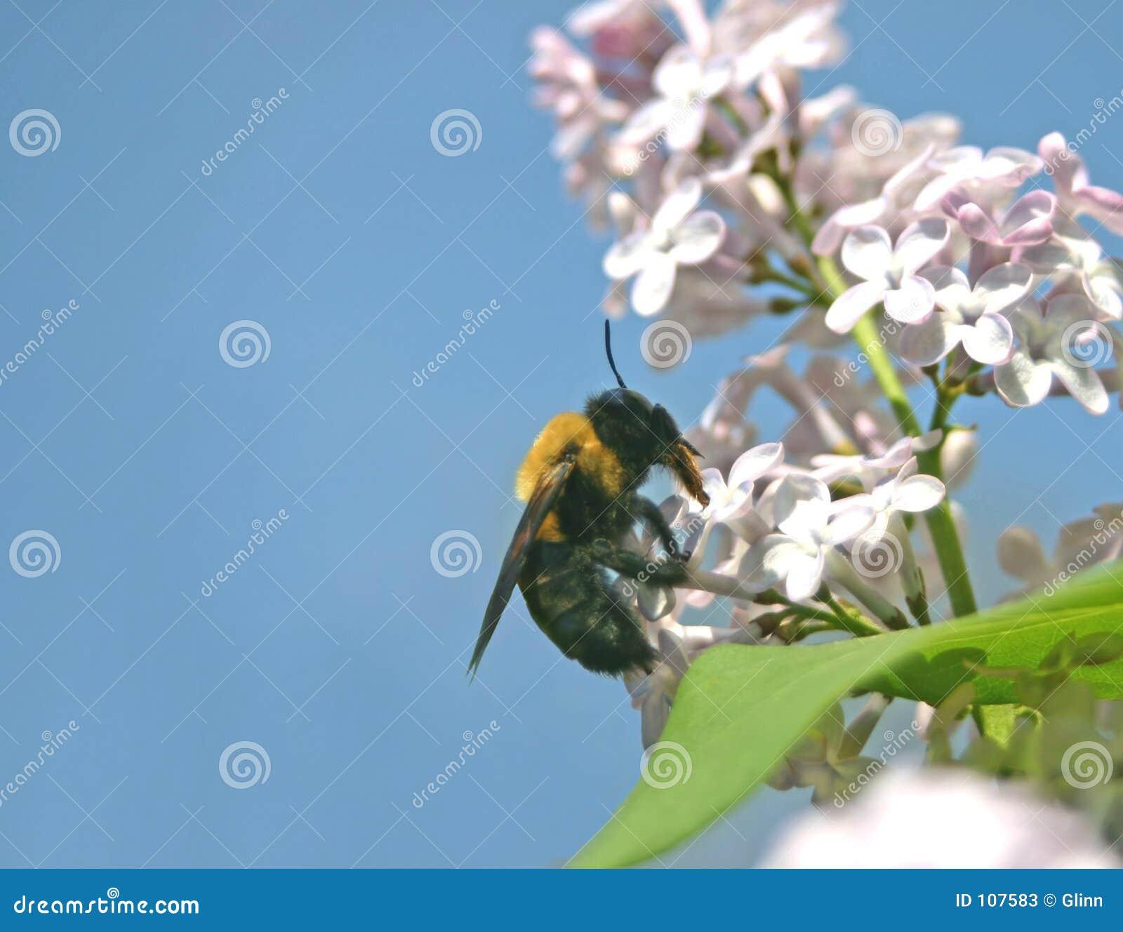 O polinizador e pollinated