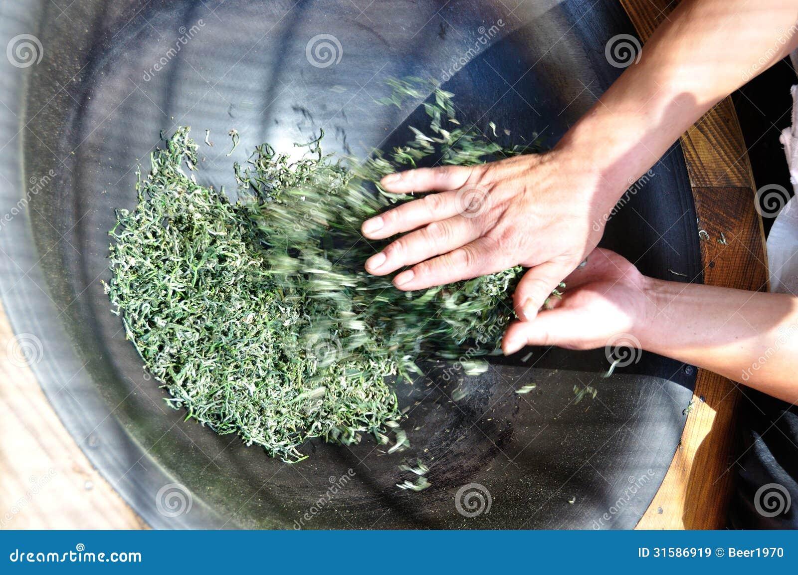 O procedimento de fabricação do chá