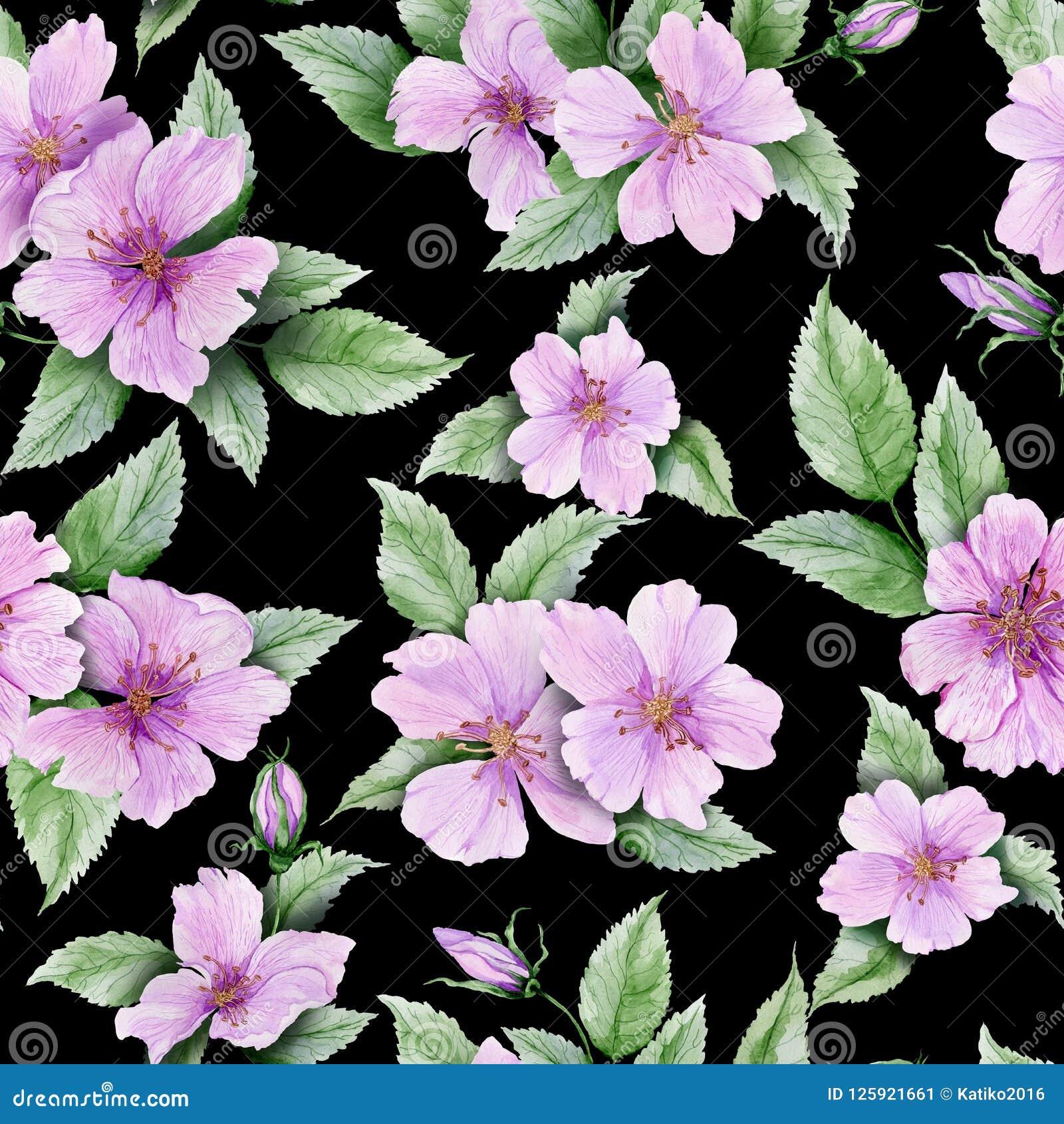 O quadril cor-de-rosa bonito floresce com as folhas no fundo preto Teste padrão floral sem emenda Pintura da aguarela