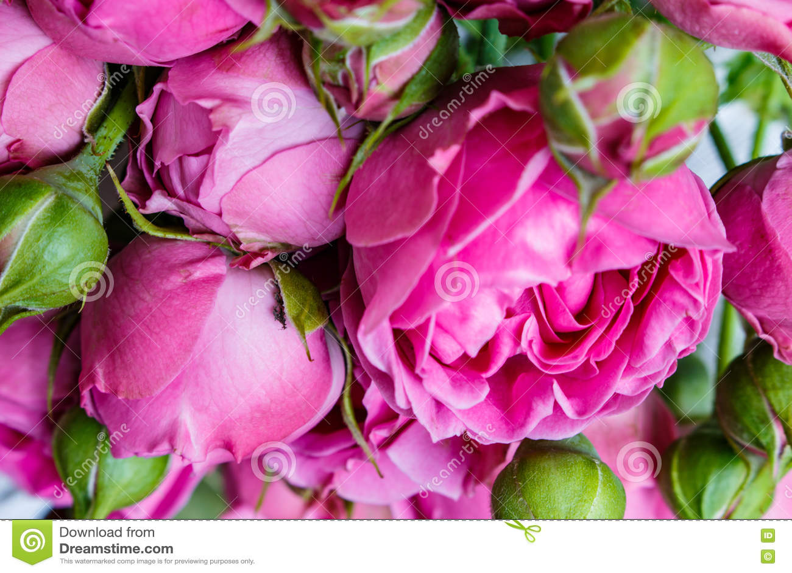 O ramalhete das peônias cor-de-rosa bonitas, rosas com folhas verdes encontra-se em uma tabela de madeira