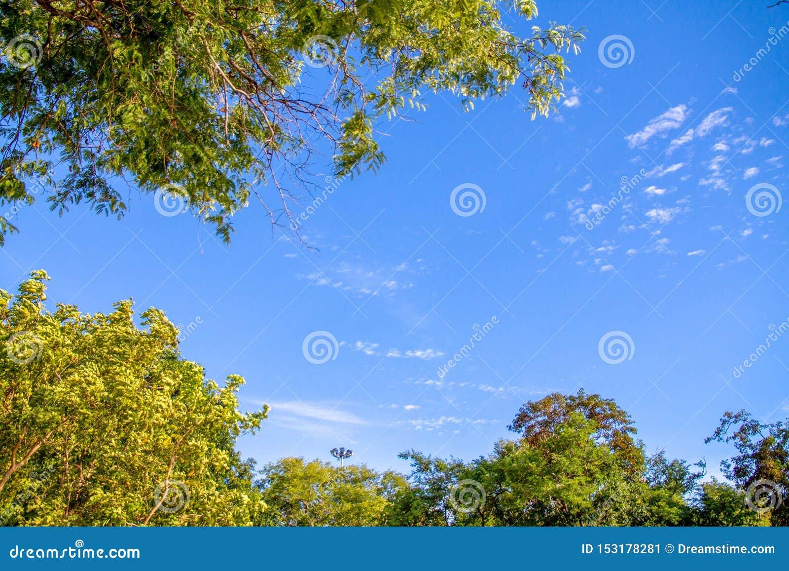 O ramo com folhas cruza-se com céu azul