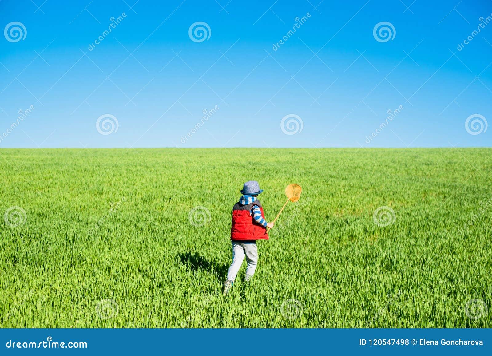 O rapaz pequeno com uma rede da borboleta corre à disposição através do campo verde