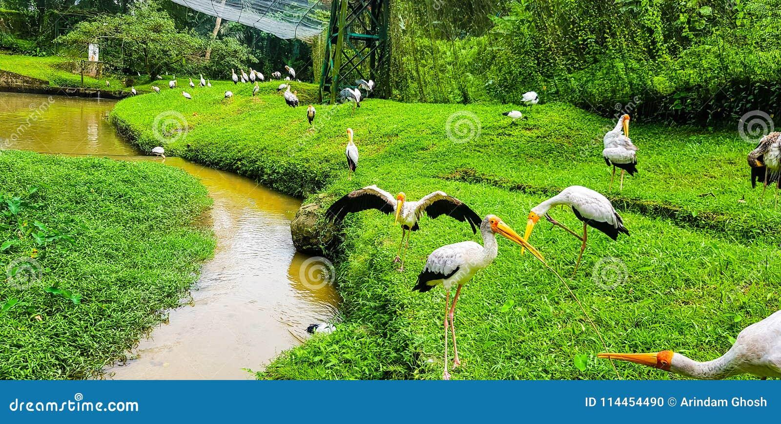 O rebanho de pássaros do flamingo dentro do pássaro do quilolitro estaciona, malaysia 2017