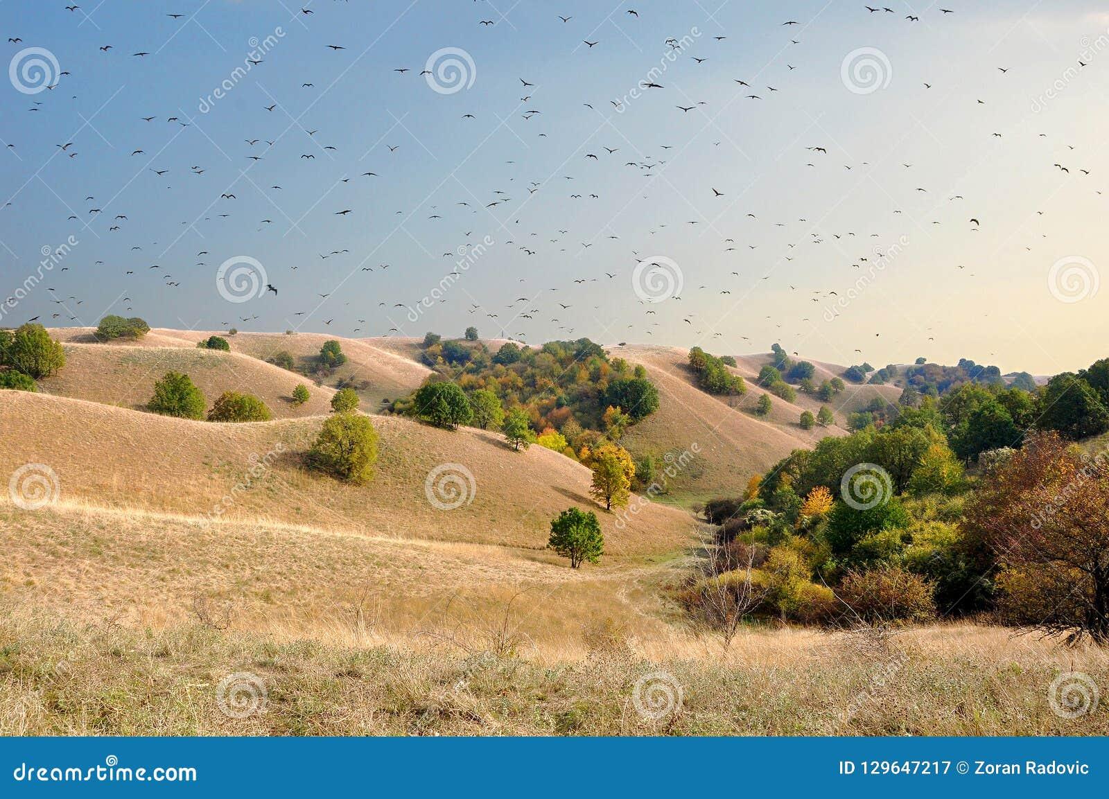 O rebanho dos círculos do pássaro acima das dunas de areia