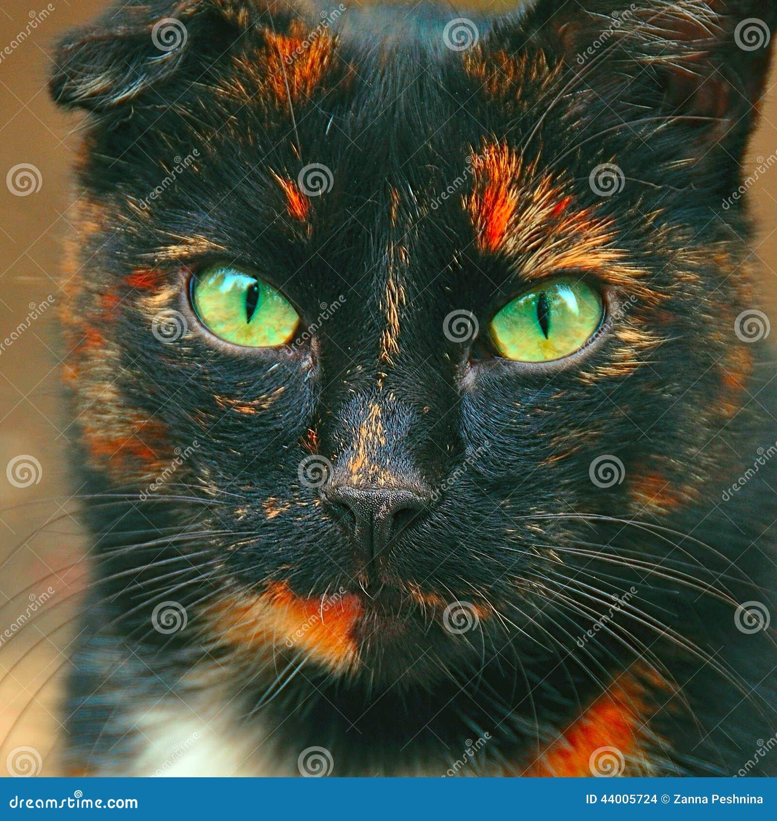 O retrato do gato manchado irritado gosta da serpente