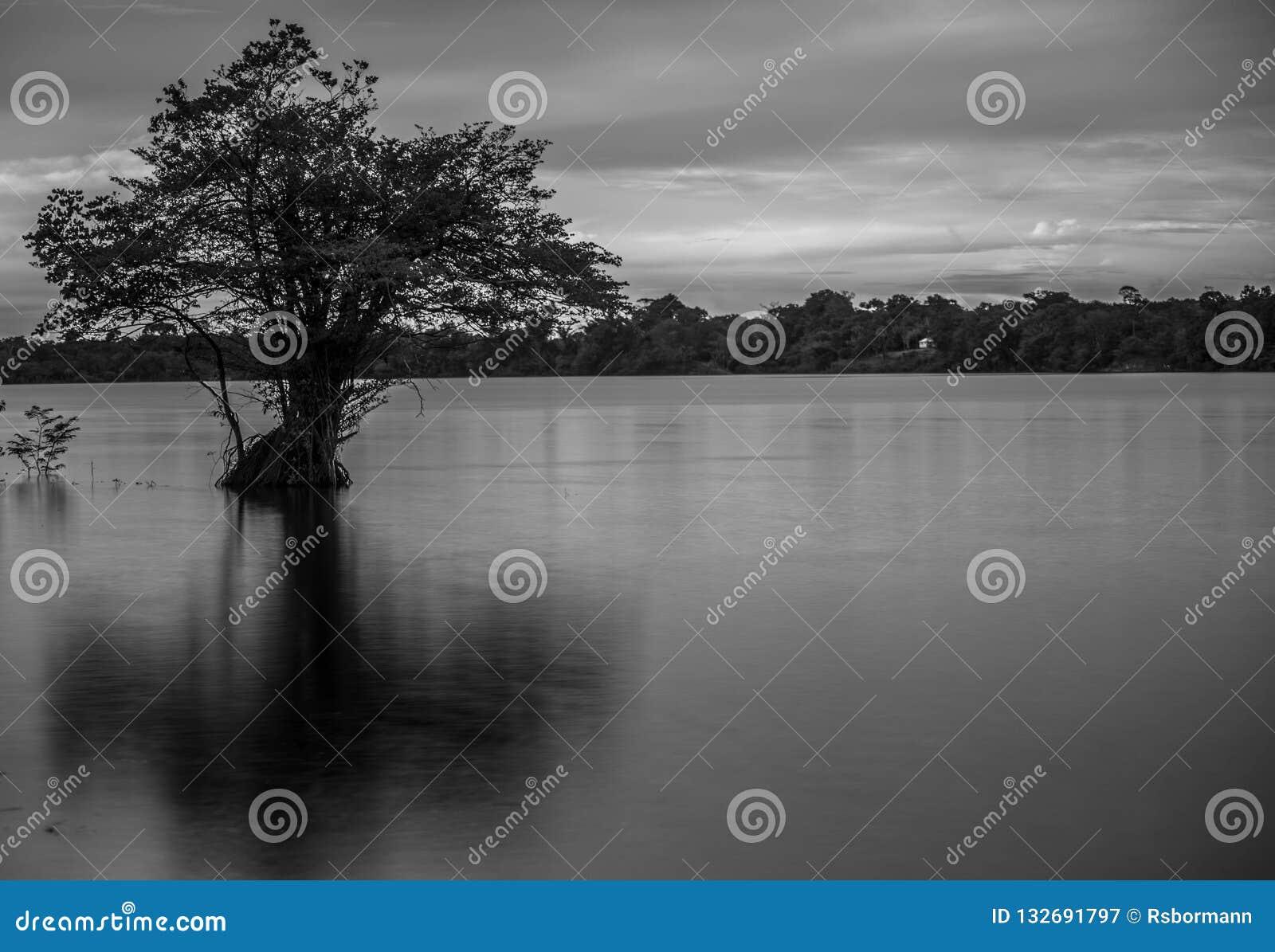 O Rio Amazonas perto de Manaus