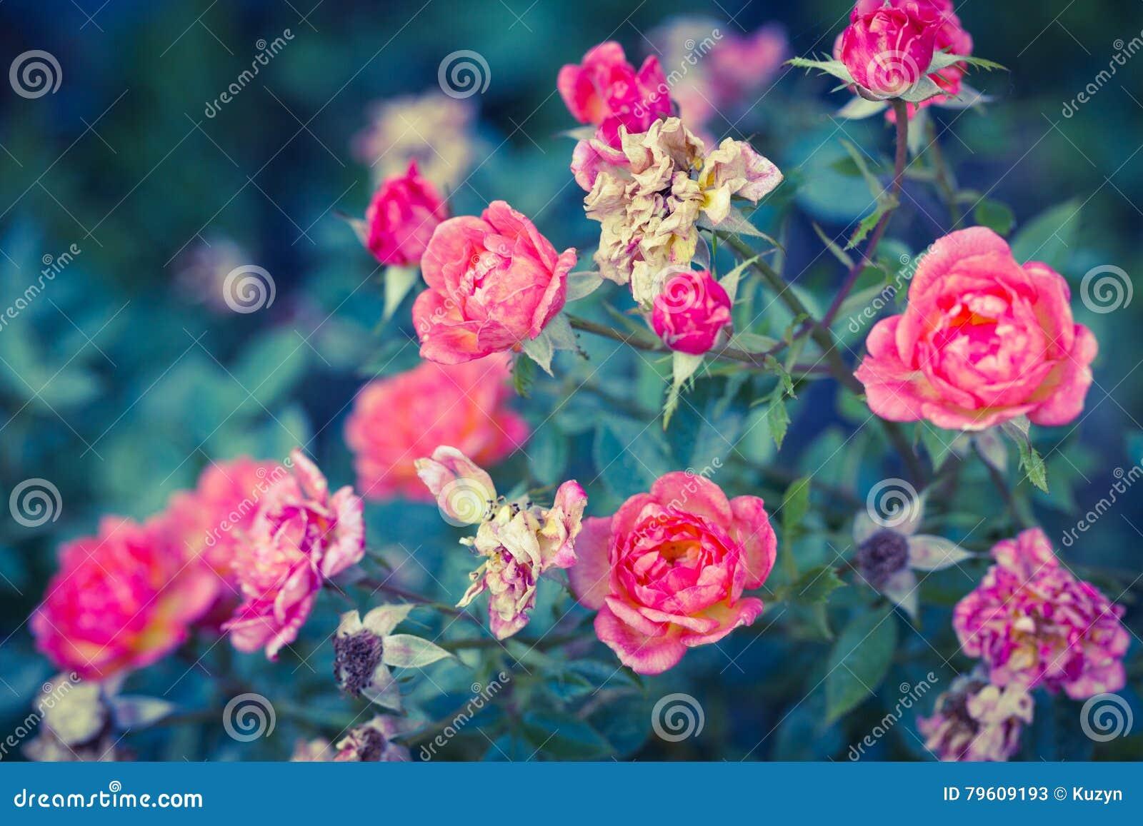O romance aumentou no jardim