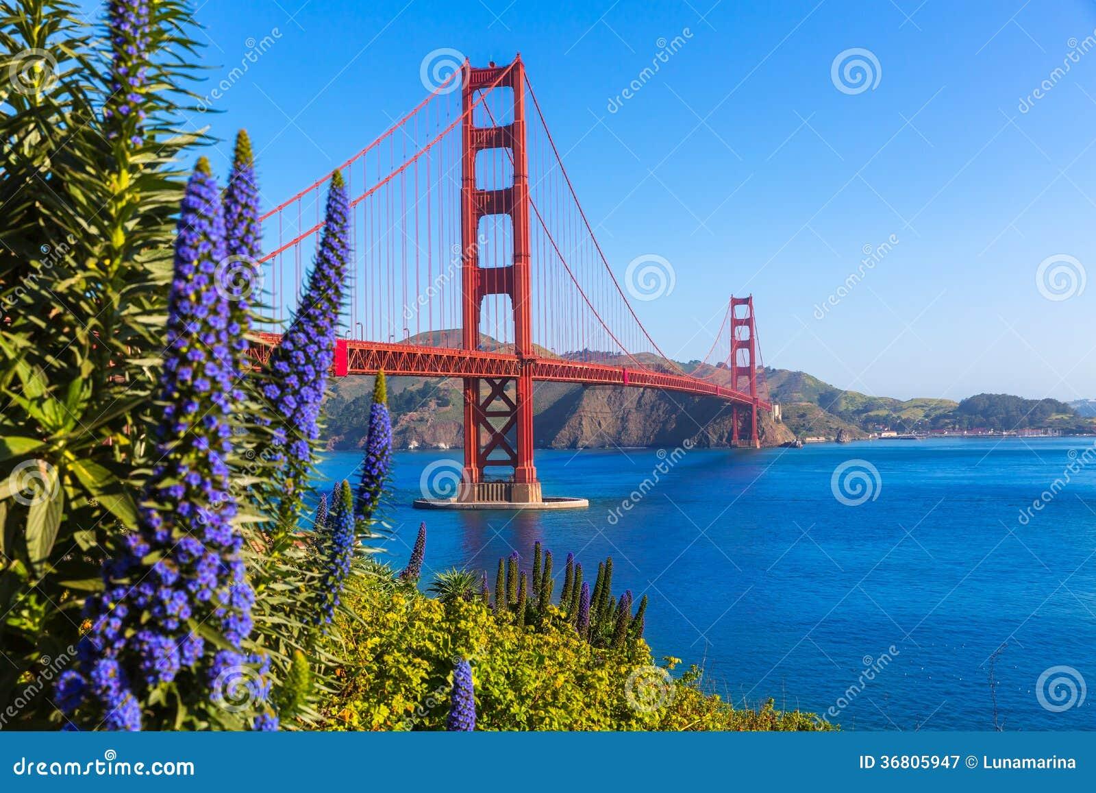 O roxo de golden gate bridge San Francisco floresce Califórnia