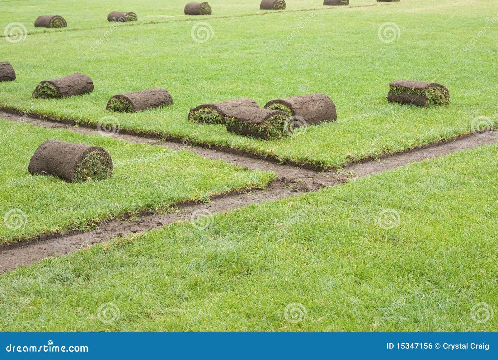 O Sod rola em um campo de grama