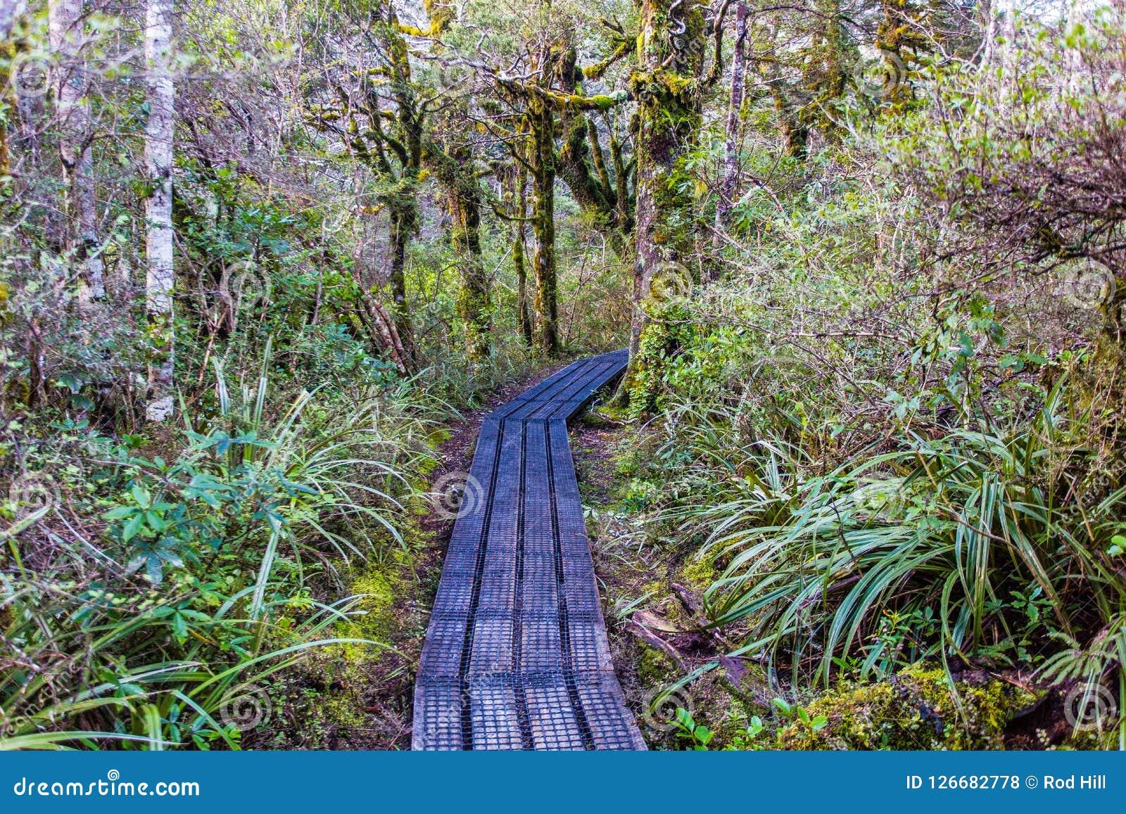 O Taranaki cai caminho - parque nacional de Tongariro