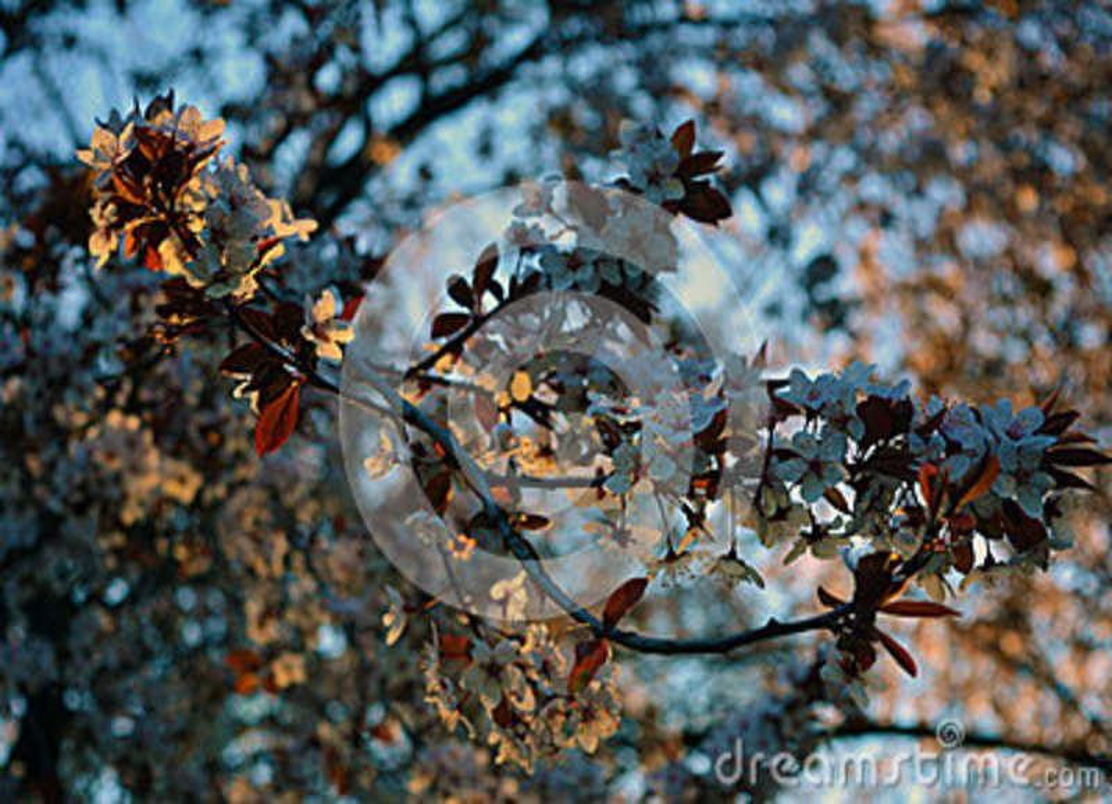 O tempo de mola… aumentou as folhas, fundo natural