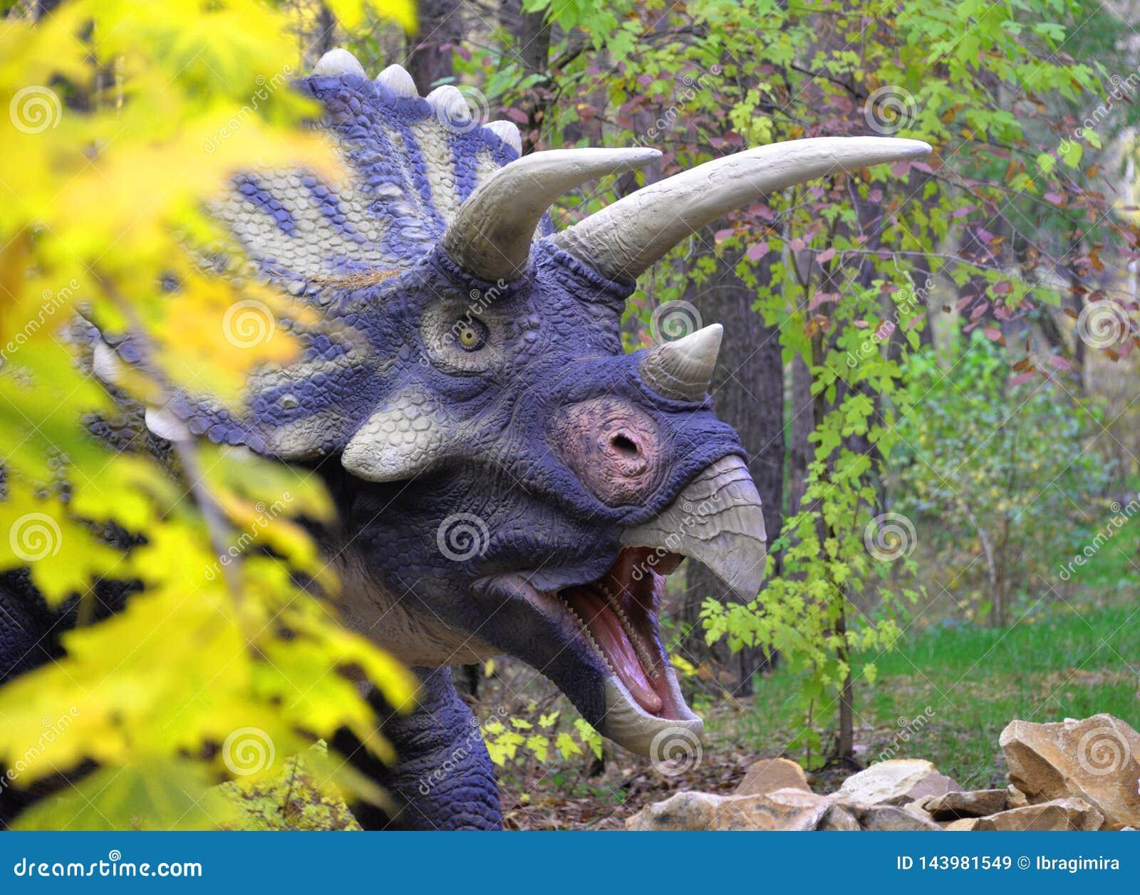 O Triceratops bonito do dinossauro olha para fora atrás de um arbusto em um prado verde