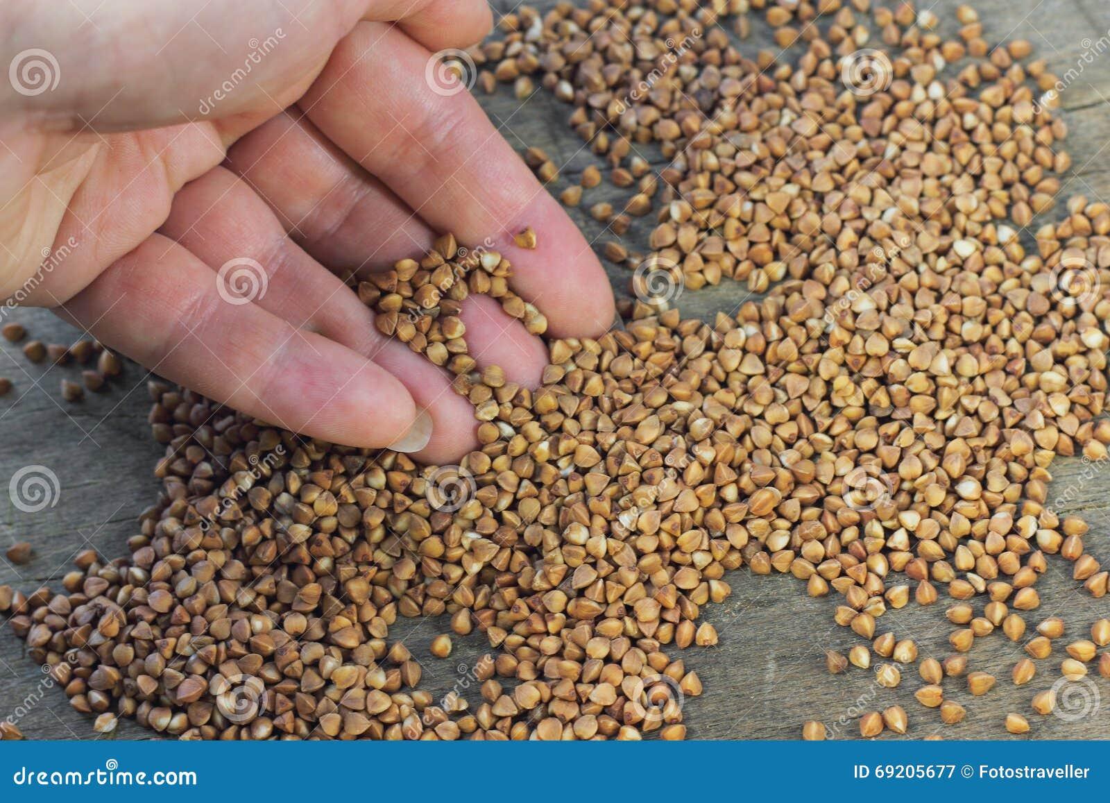 O trigo mourisco útil