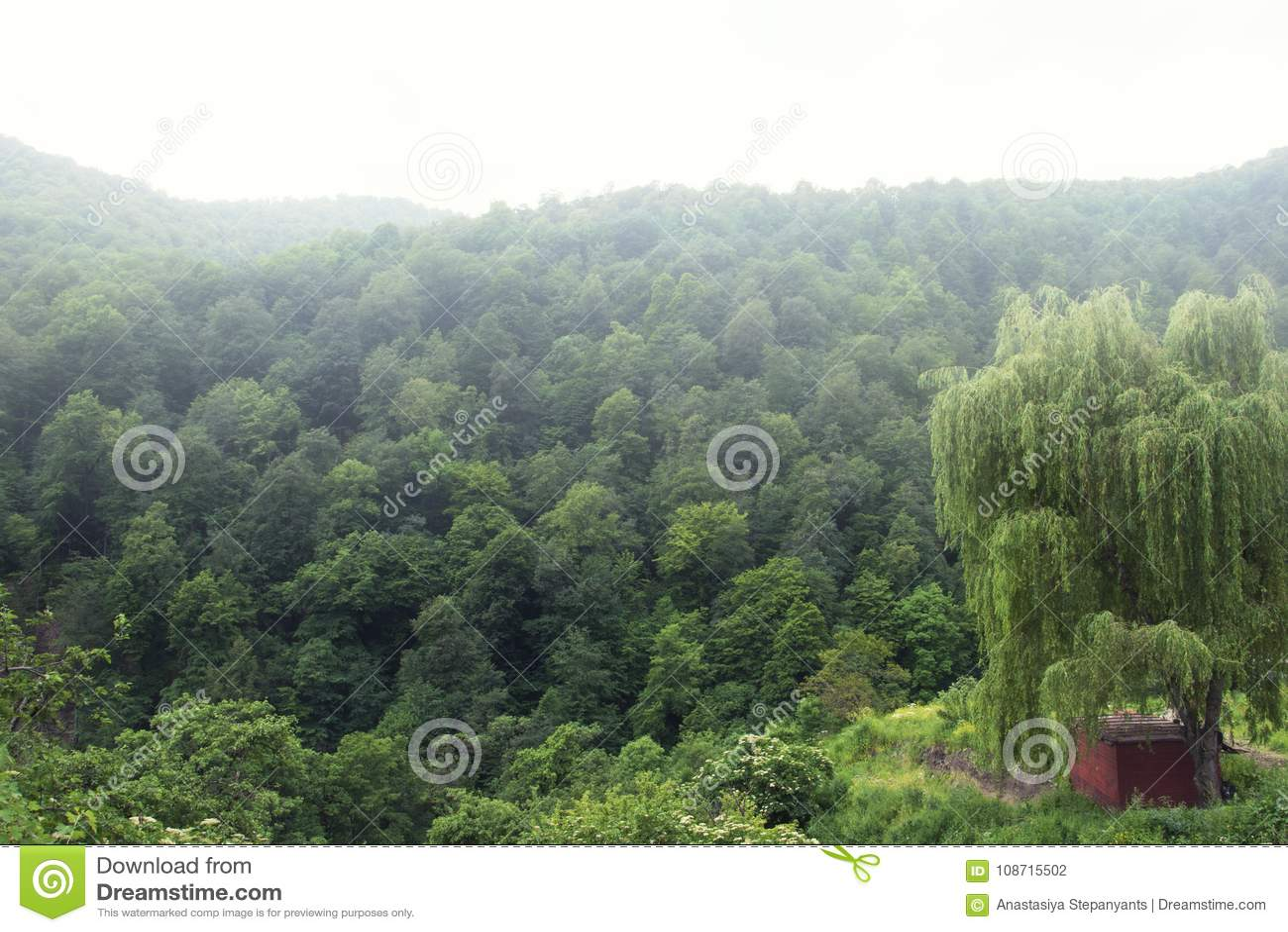 O vale florestado da escala de Ijevan Névoa sobre as montanhas Vista do monastério Haghartsin Grande salgueiro arménia