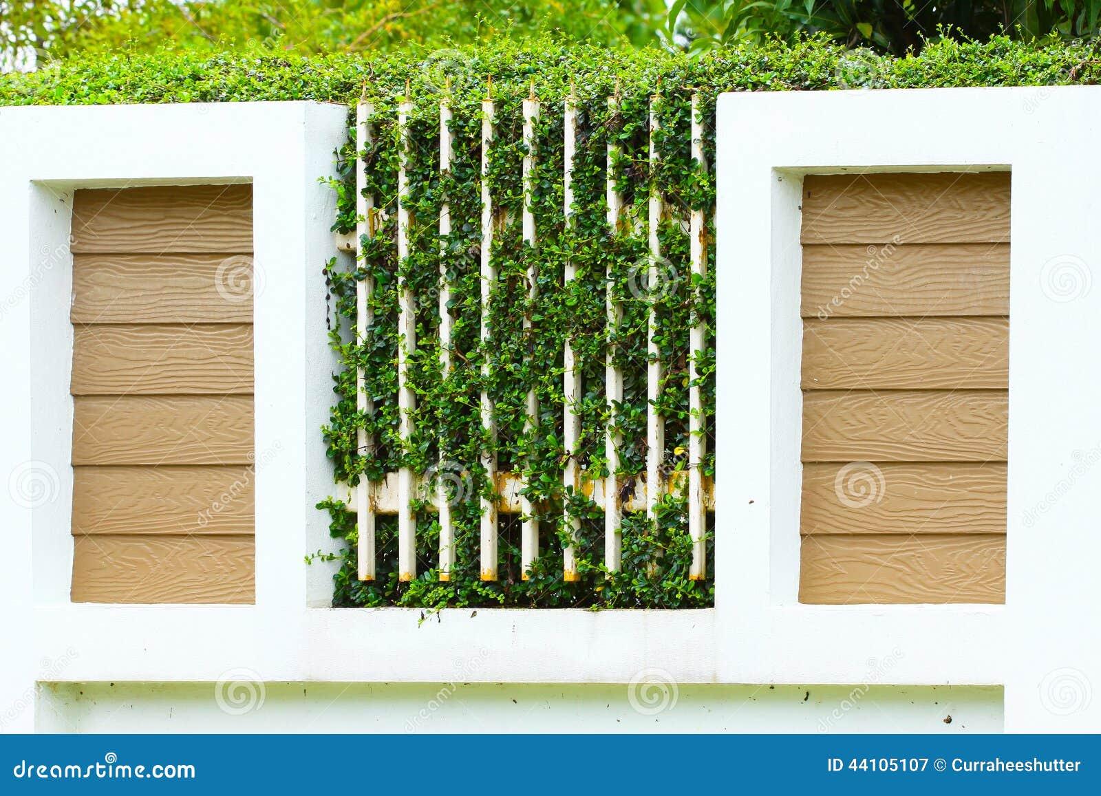 O verde deixa as samambaias na parede, paredes velhas com natureza Textura ou fundo para o papel da apresentação