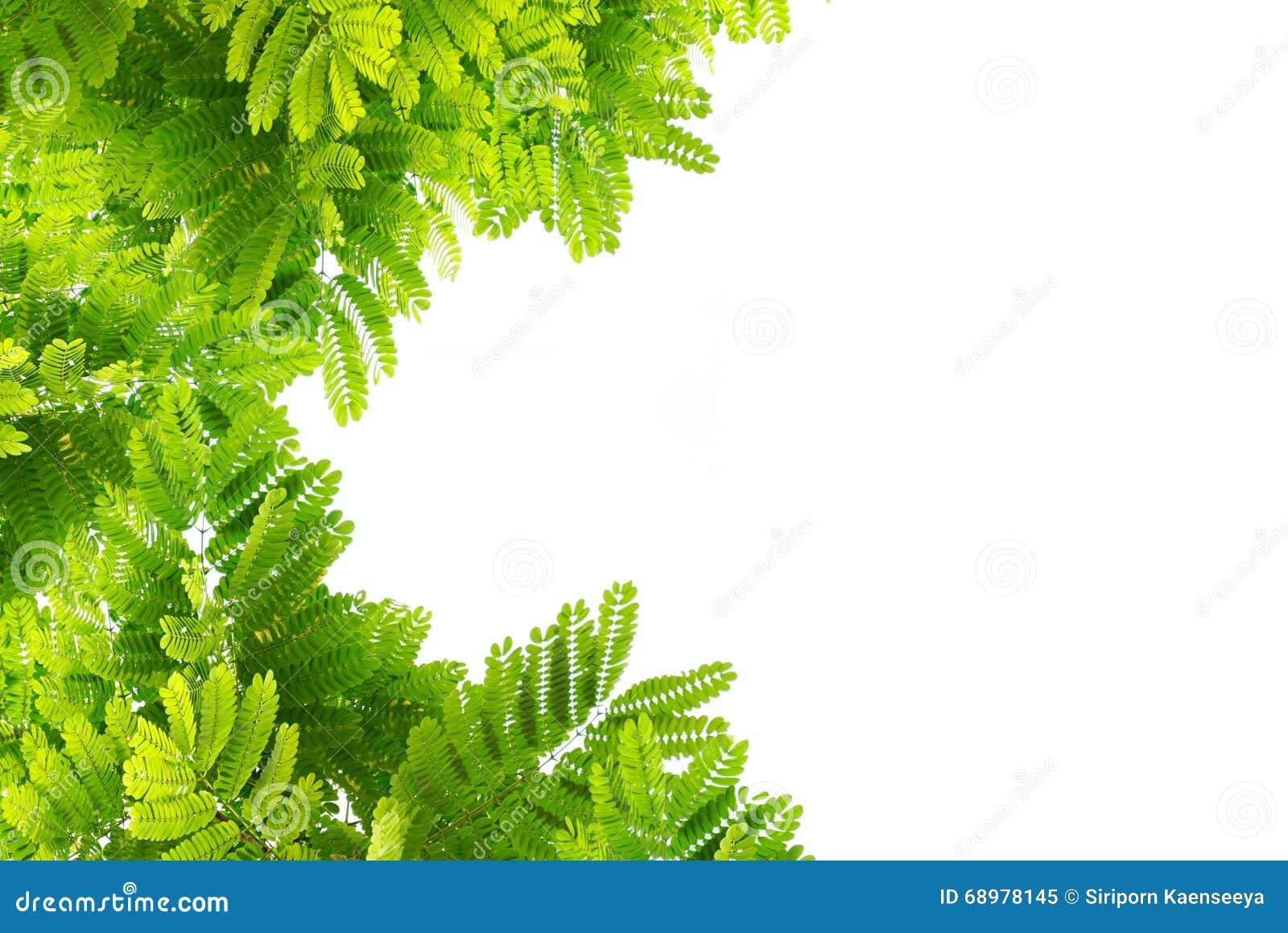O verde deixa a natureza no isolado branco