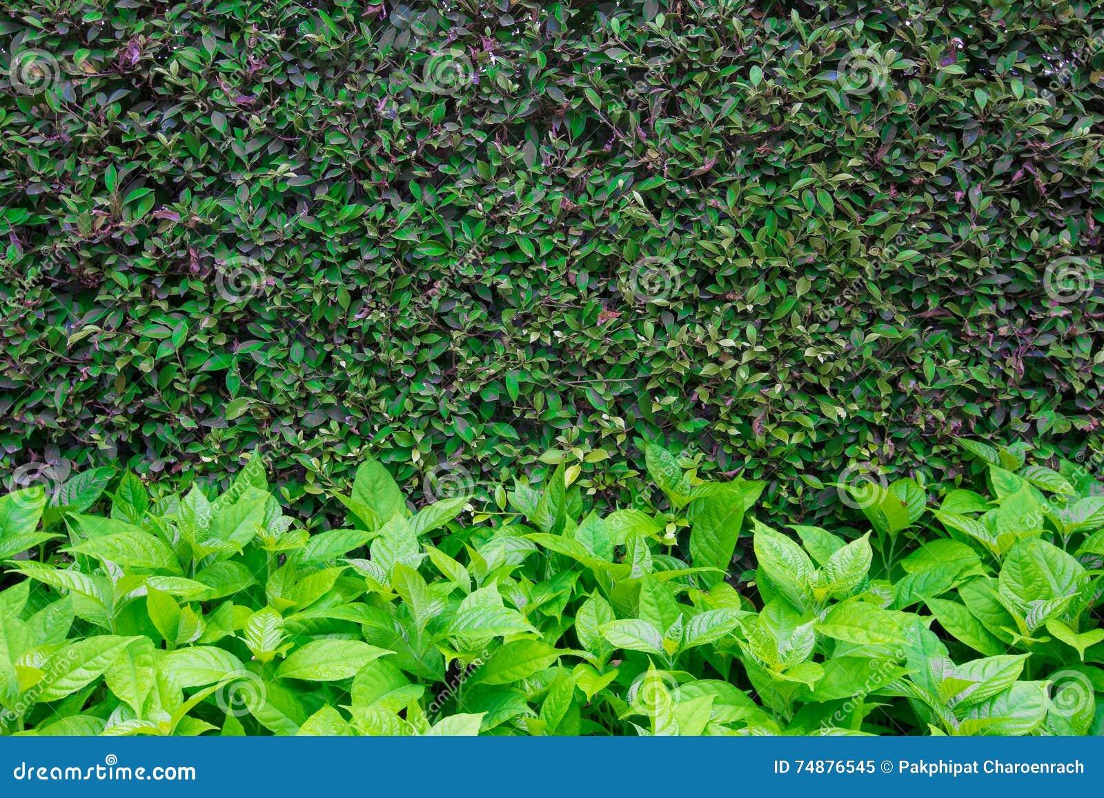 O verde deixa a textura do fundo da parede