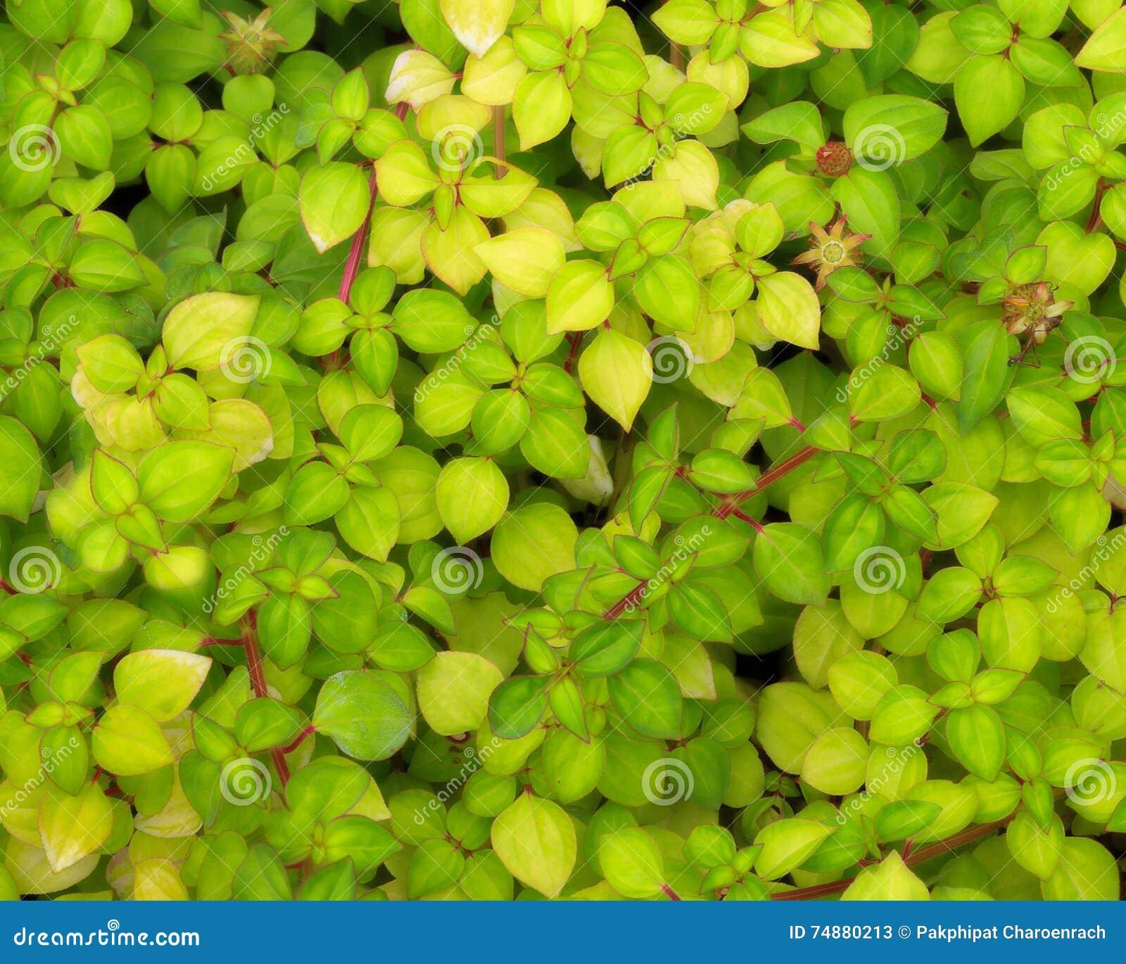 O verde deixa a textura natural do fundo da parede