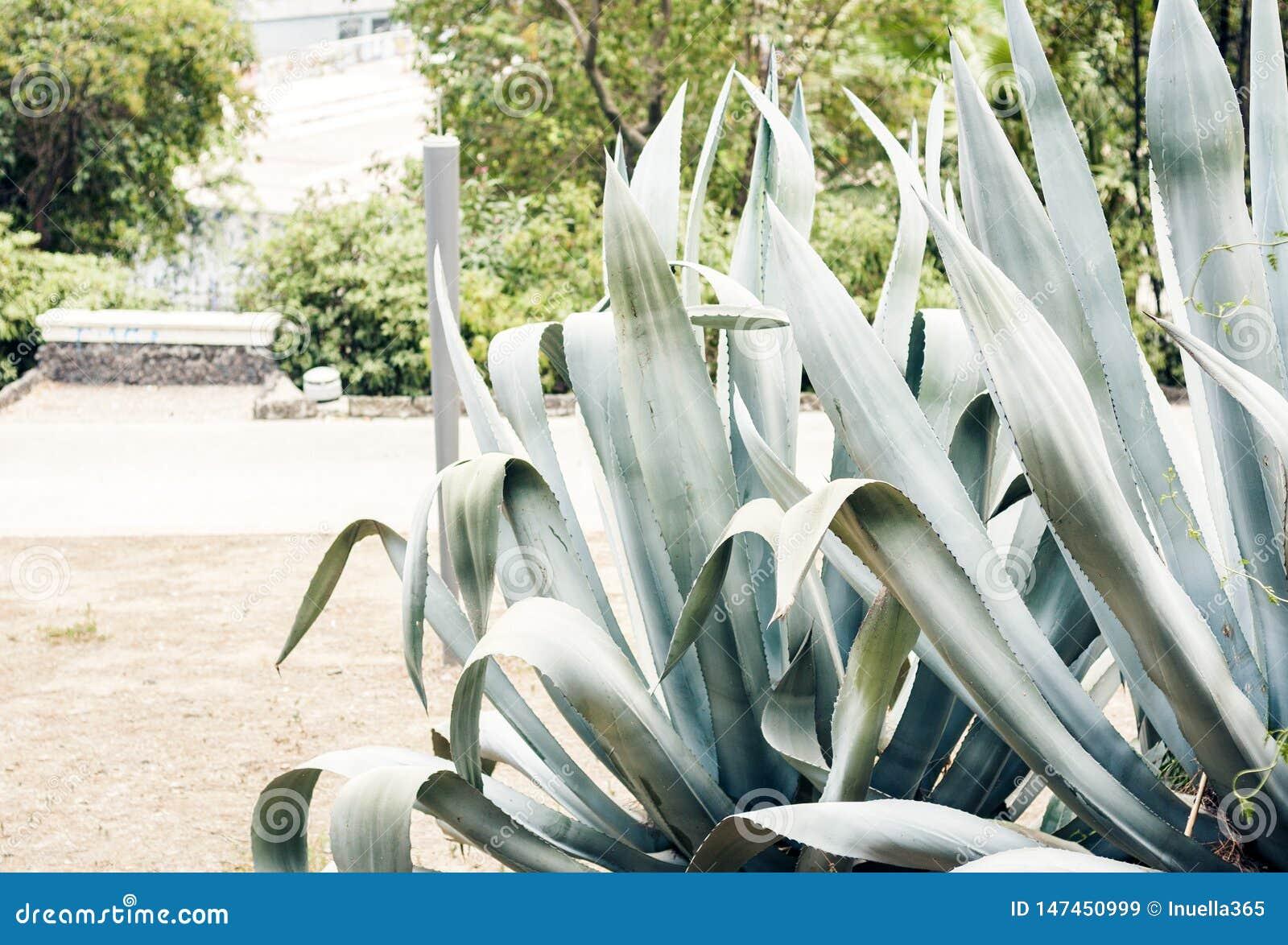 """O verde deixa a textura para arbusto planta do †do projeto do contexto da """"na rua de Catania, Sicília, Itália"""