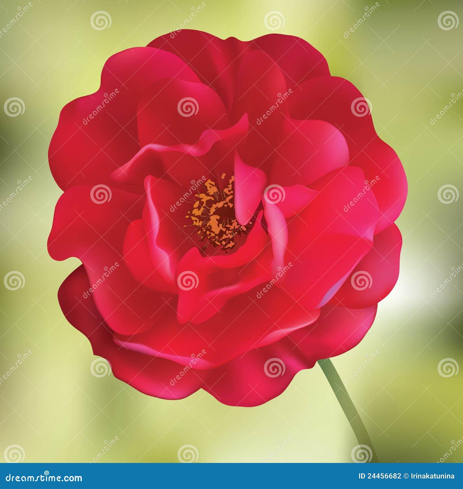 O vermelho levantou-se. Flor do engranzamento