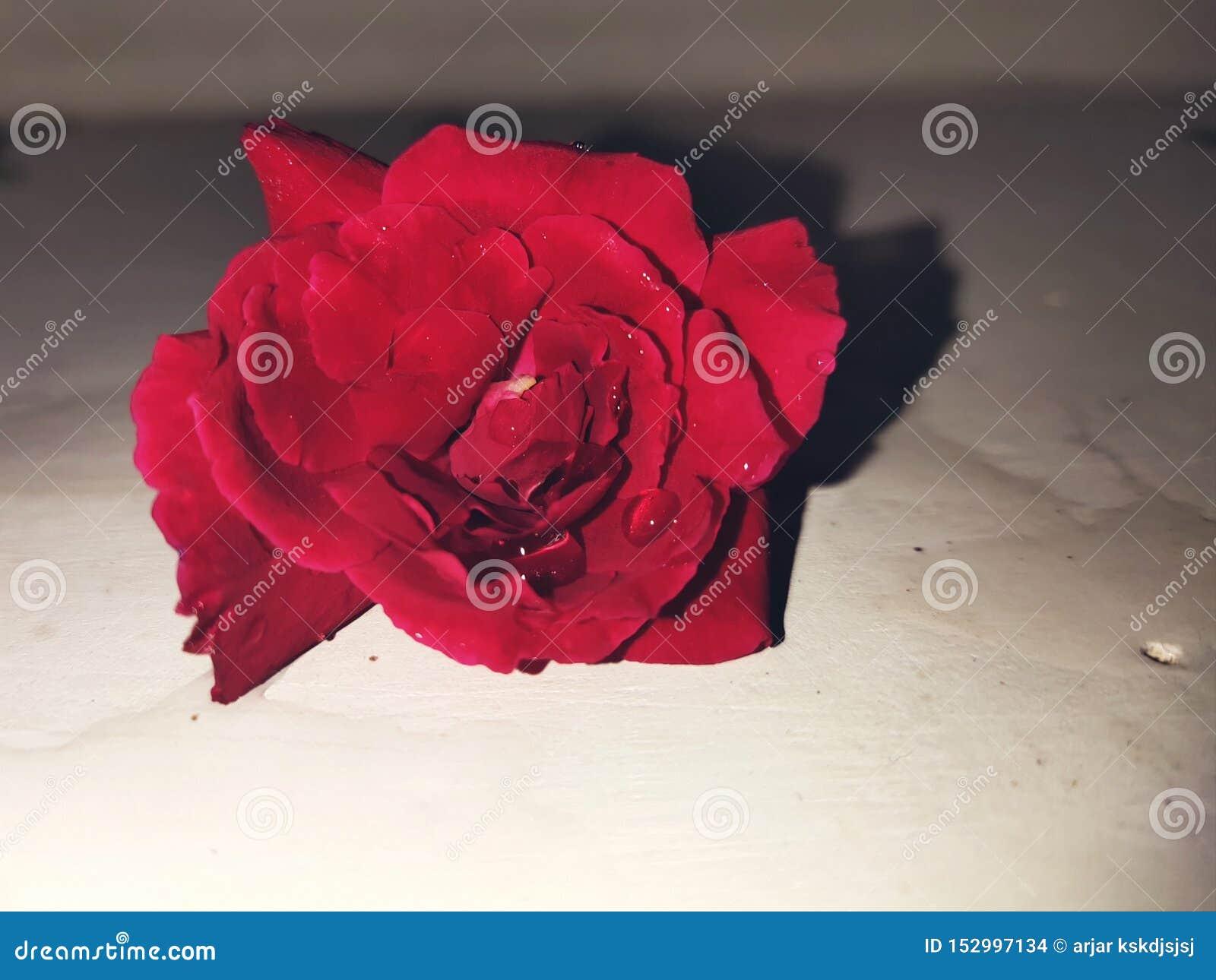 O vermelho levantou-se Flor