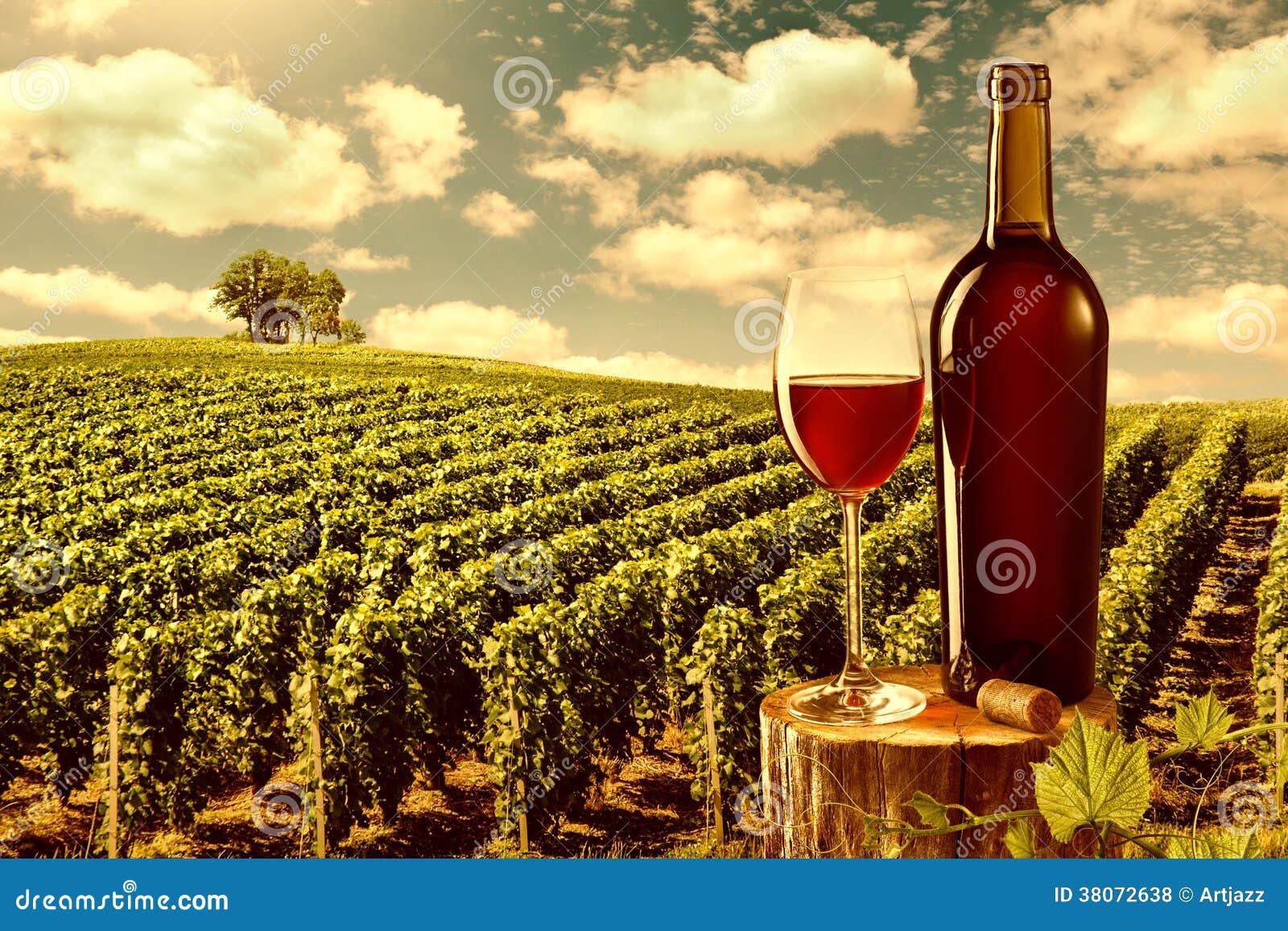 O vidro e a garrafa do vinho tinto contra o vinhedo ajardinam