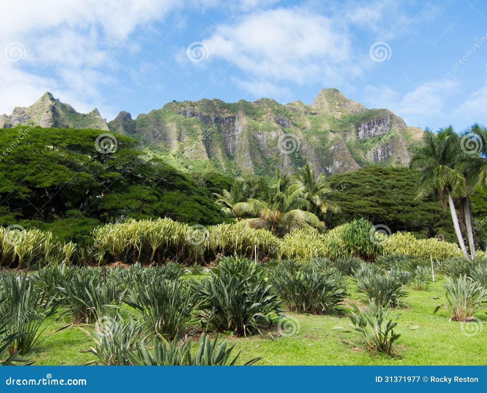 Oahu Pali
