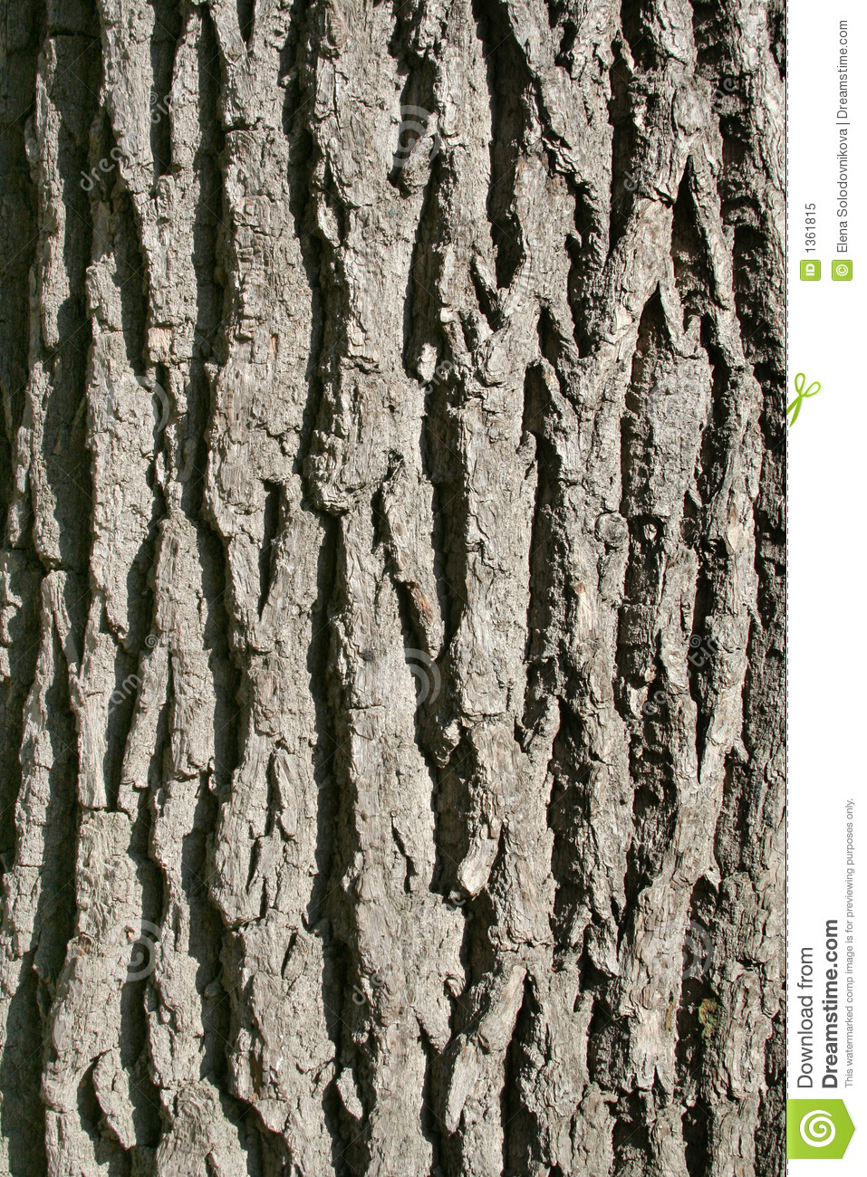 Oak Bark S Texture Vertically Stock Image Image 1361815