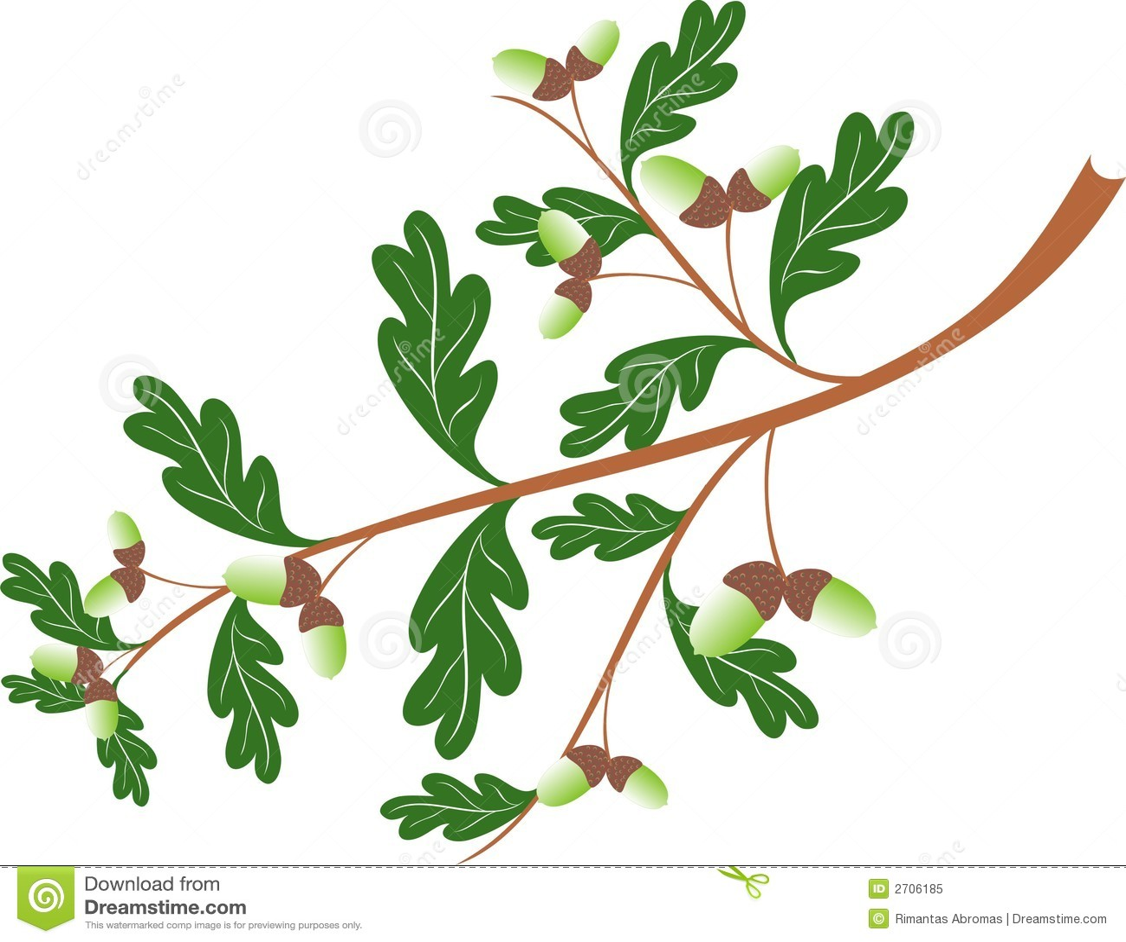 Oak Wood Branches ~ Oak branch stock vector image of wood umbrous quercus