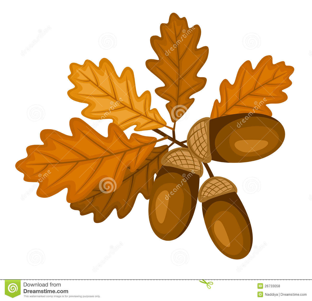 Oak Branch With Leaves And Acorns Vector Illustra Stock