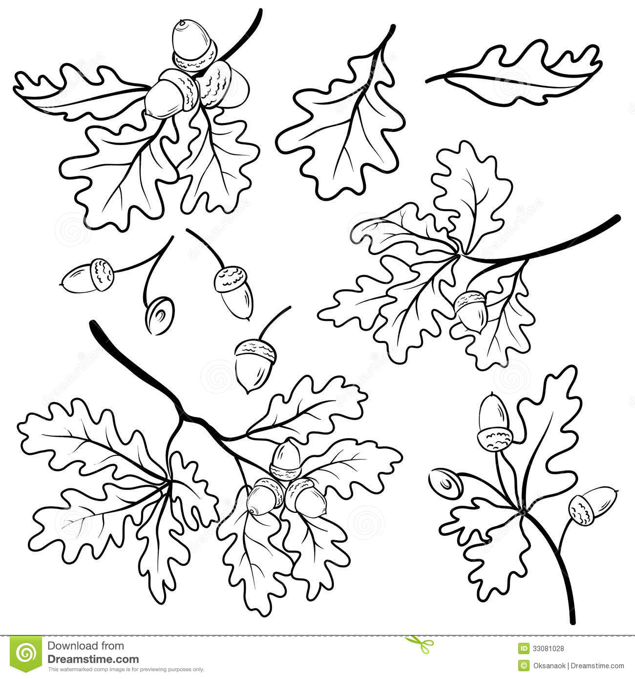 Oak Branches With Acorns Outline Royalty Free Stock