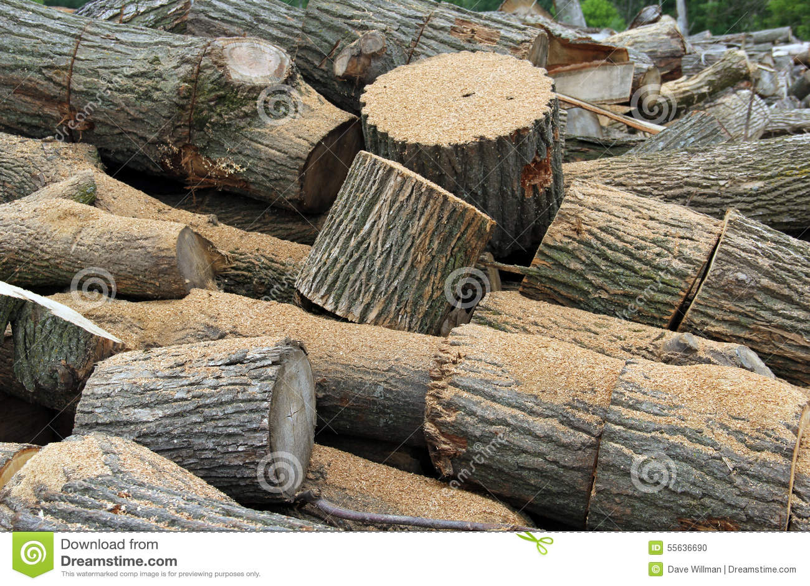 Oak firewood wood pile background stock photo image of
