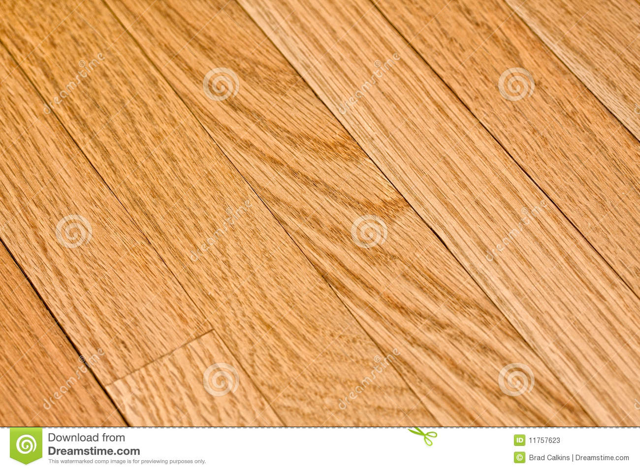 Oak floor stock photos image 11757623 Unstained hardwood floors