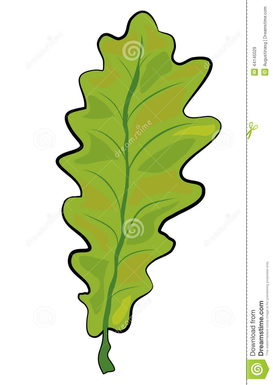 Oak Leaf Photos Free Oak Leaf Images Page 1  FreeImagescom