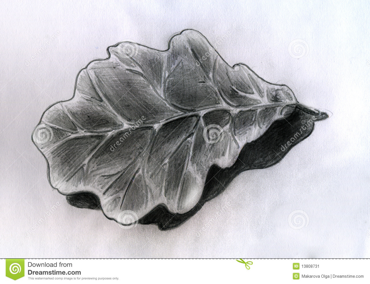 Oak leaf sketch stock illustration