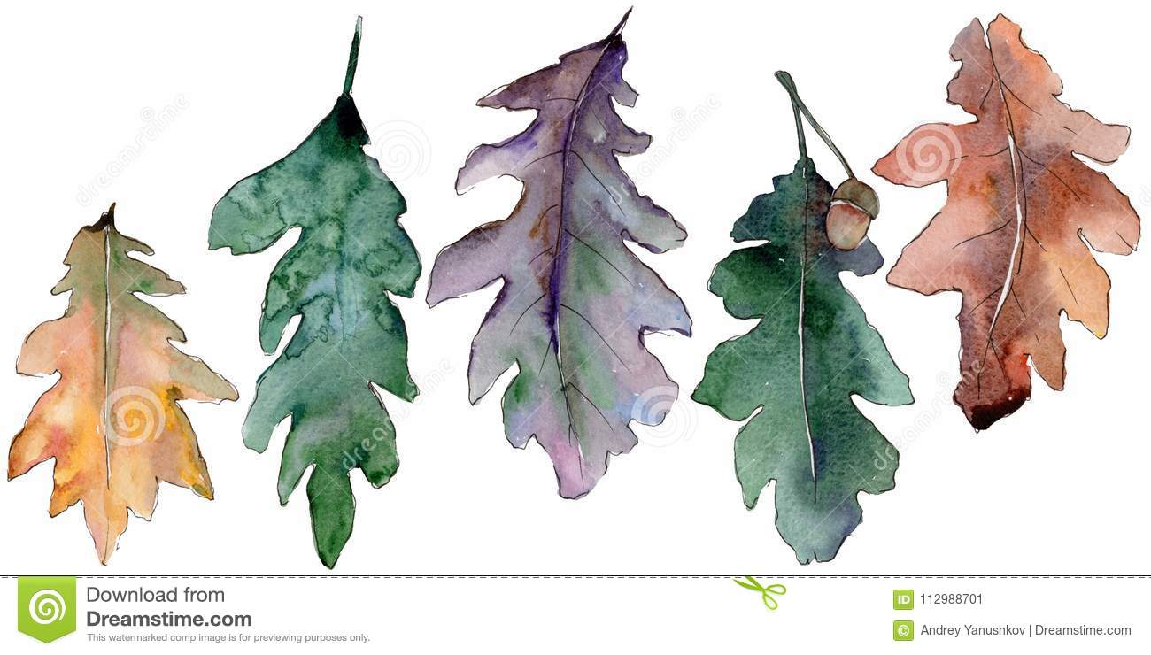 Oak leaves in a watercolor style isolated.