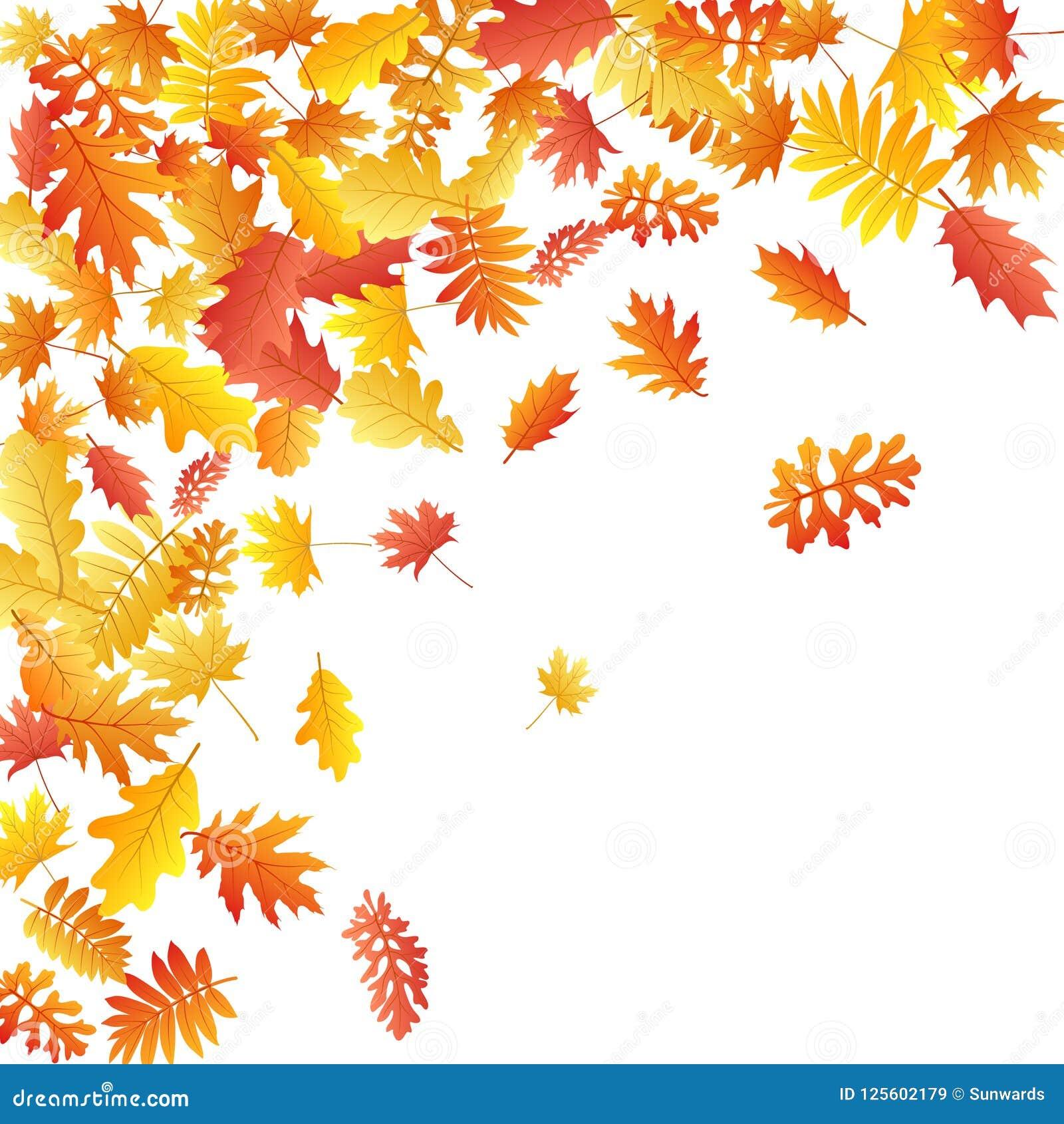 Oak, maple, wild ash rowan leaves vector, autumn foliage on white background.