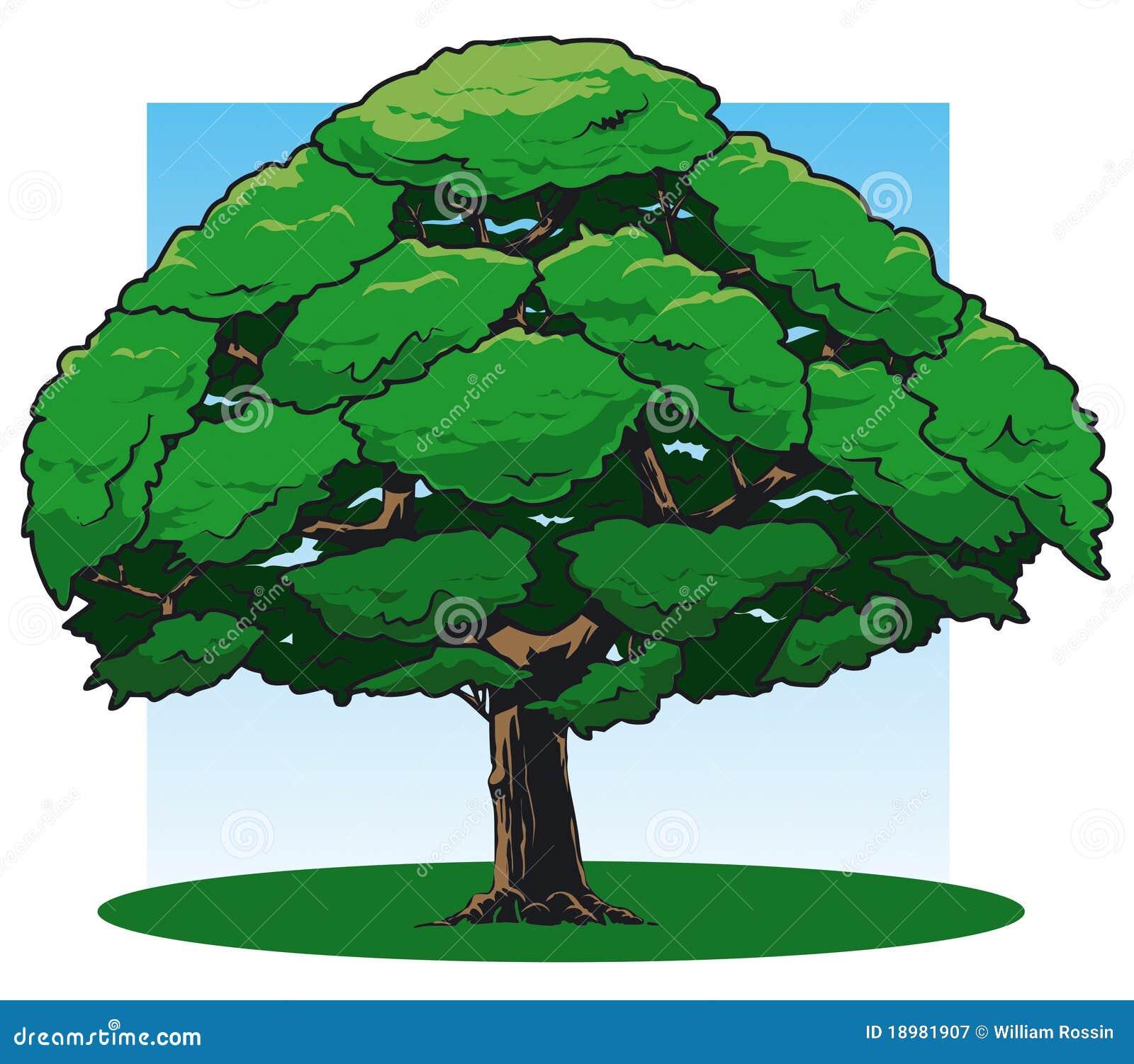Oak Tree Cartoon Oak Tree Pictures Cartoon Oak