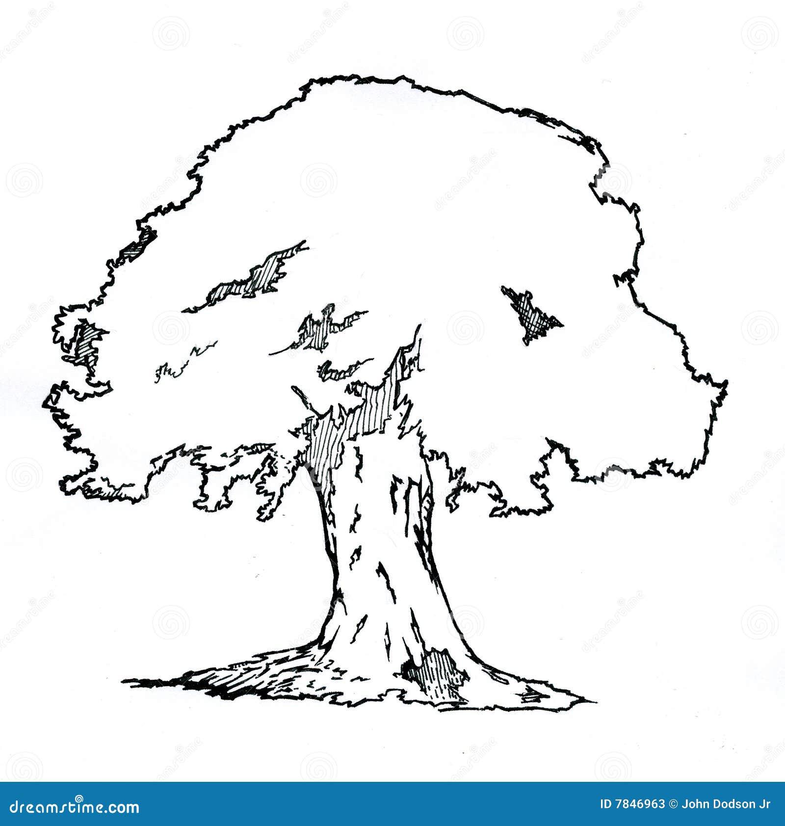 Oak Tree Stock Photos