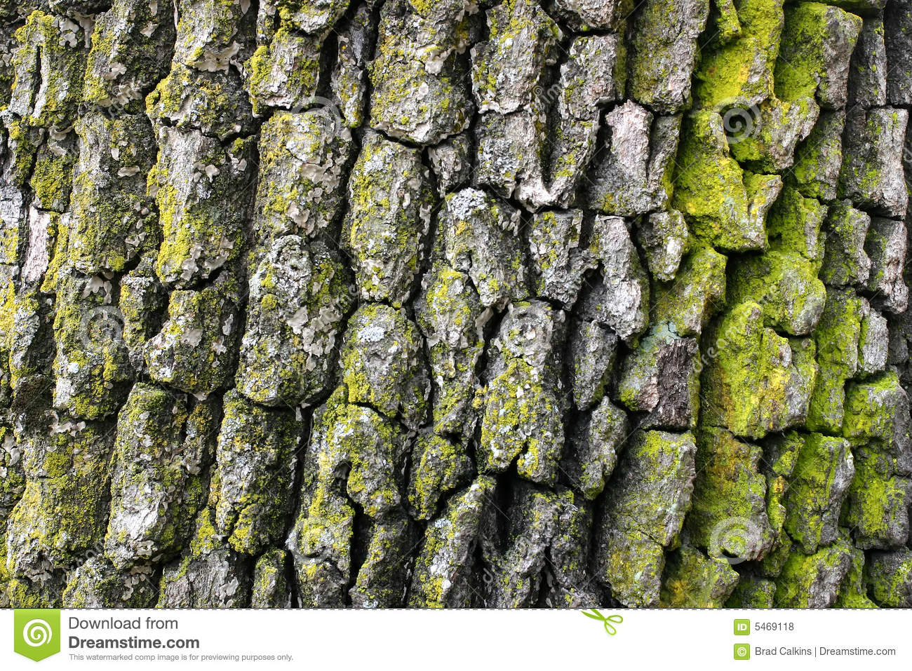 Horizontal Rainbow Eucalyptus Tree Bark Stock Image - Image of ...