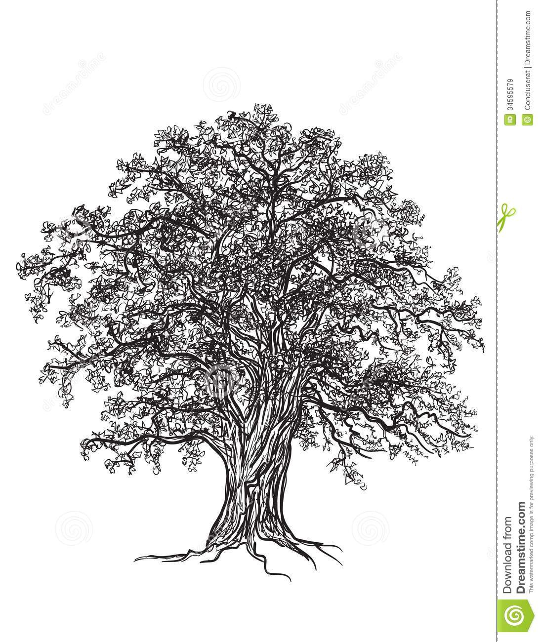 Black and white oak tree with leaves  Drawn with illustrators brushes    Oak Tree Clip Art Black And White