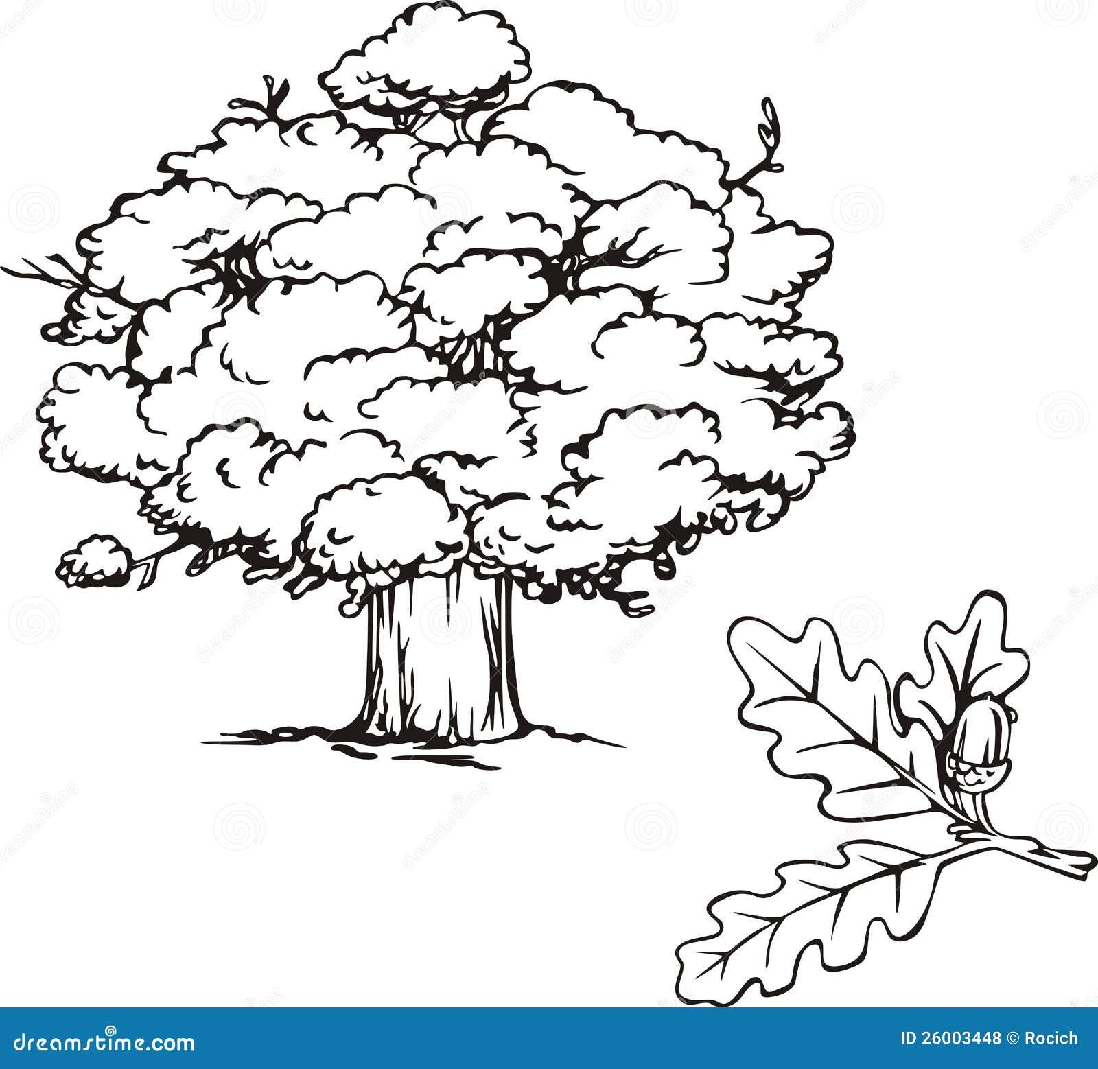 Рисунок дерева дуба с желудями 2
