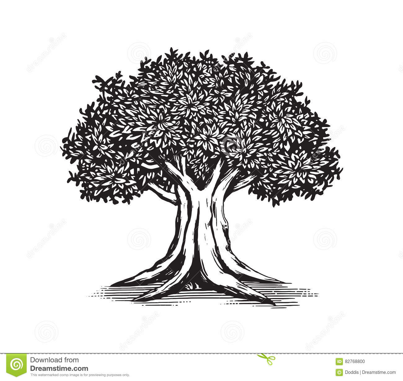 Tree Line Art Design : Oak tree drawing vector logo design illustration stock