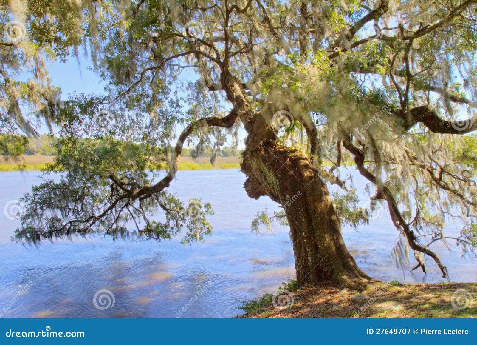 Oak tree at magnolia plantation charleston sc royalty for 3d dreams fort mill sc